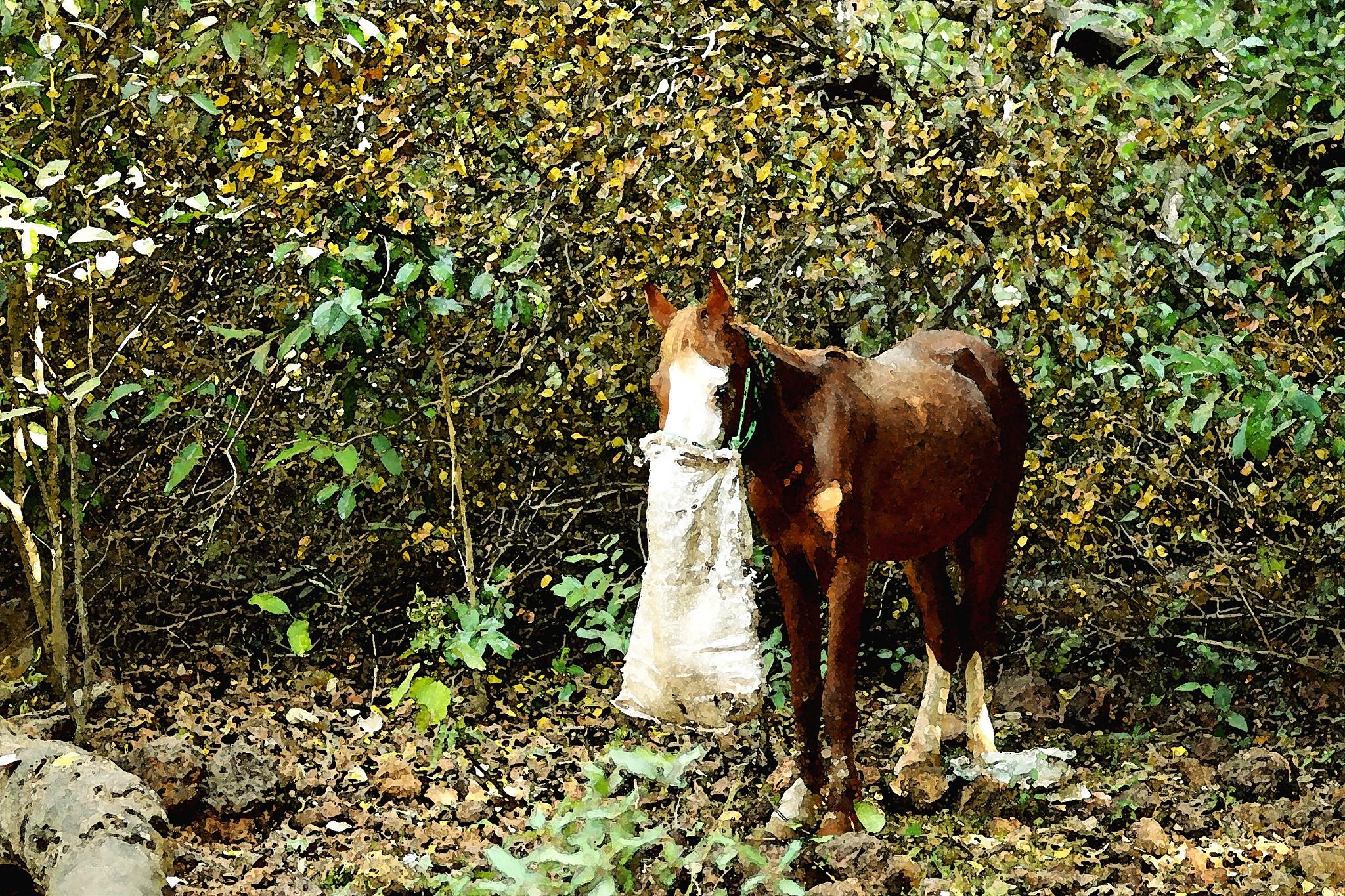Photo in Fine Art #fine art #horse #portrait #edit