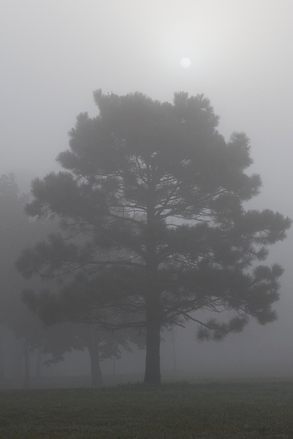 Sun shines through fog by Bernard Mordorski