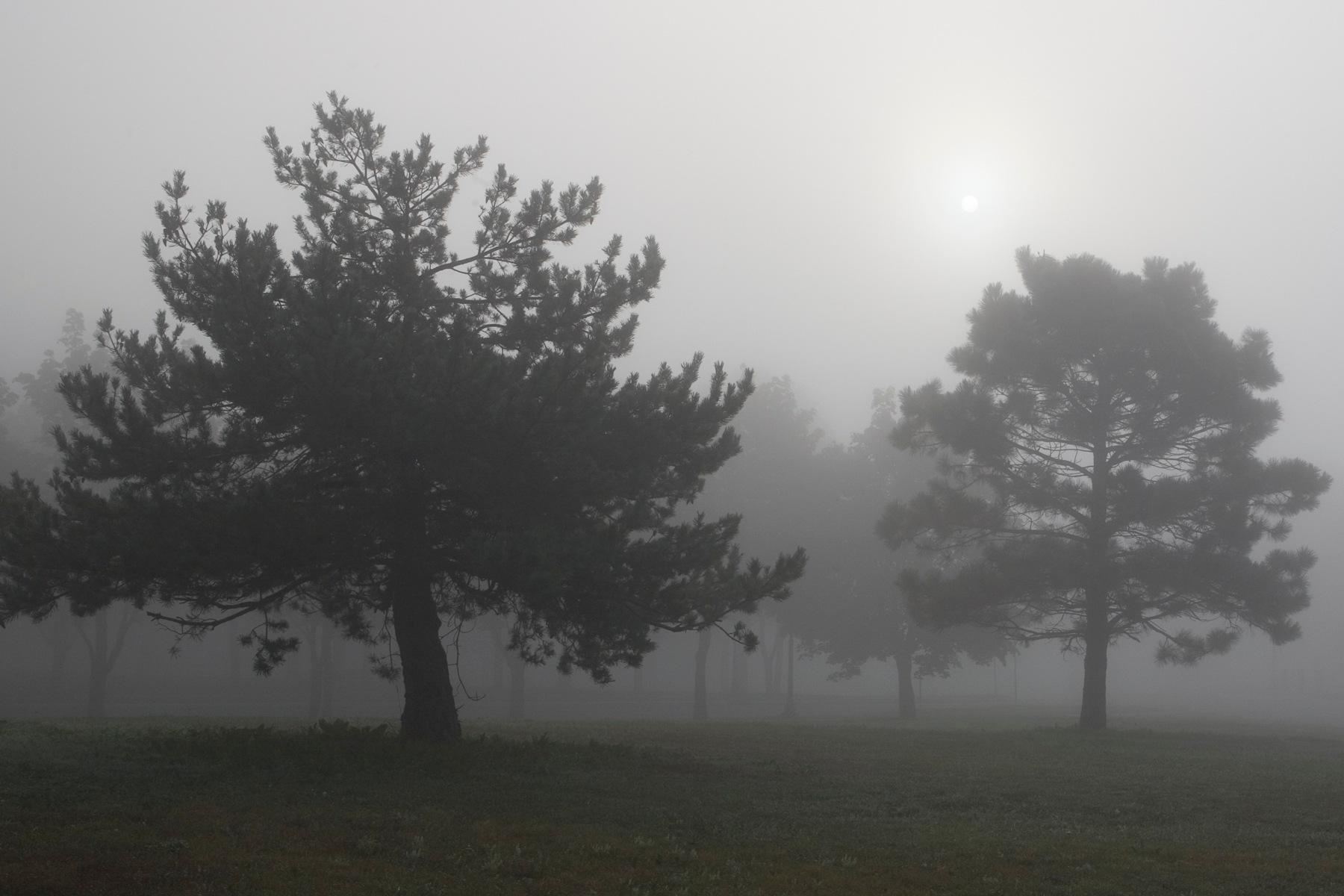 Sun poking through fog over trees by Bernard Mordorski