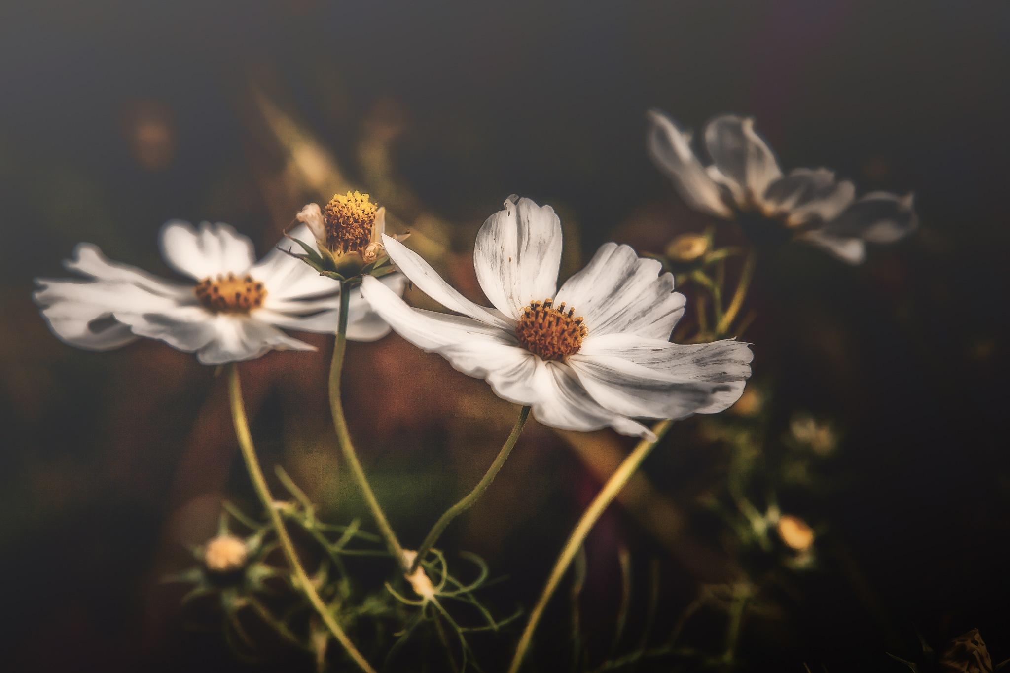 Grace.. by davidwalpole