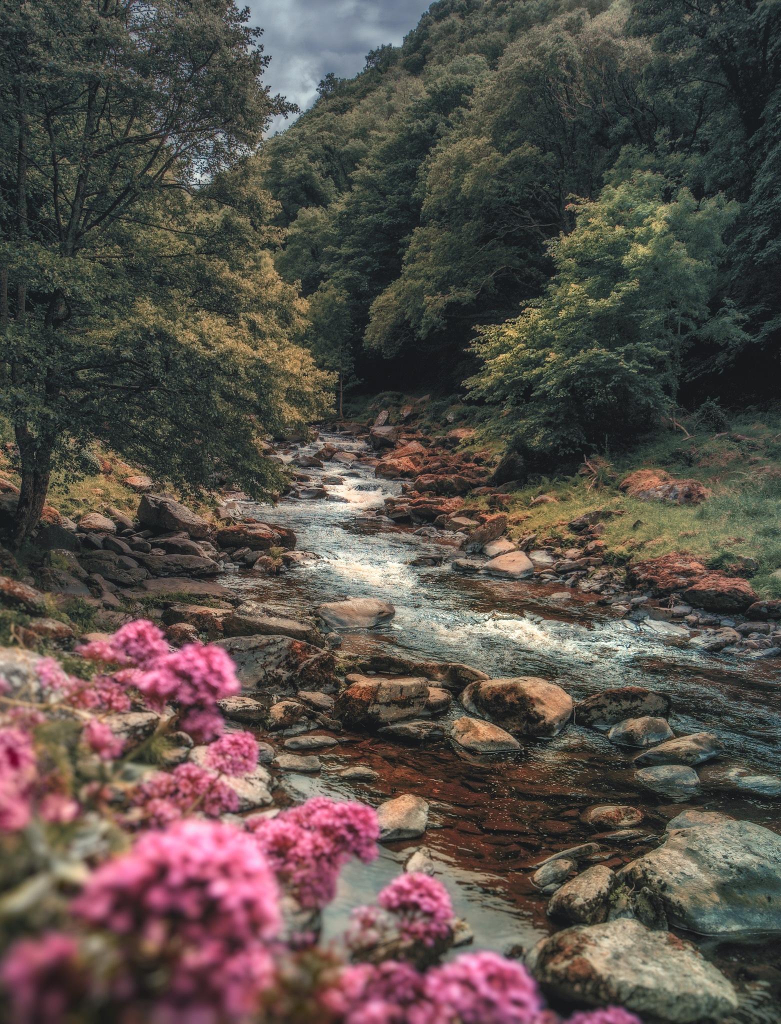 Watersmeet by davidwalpole