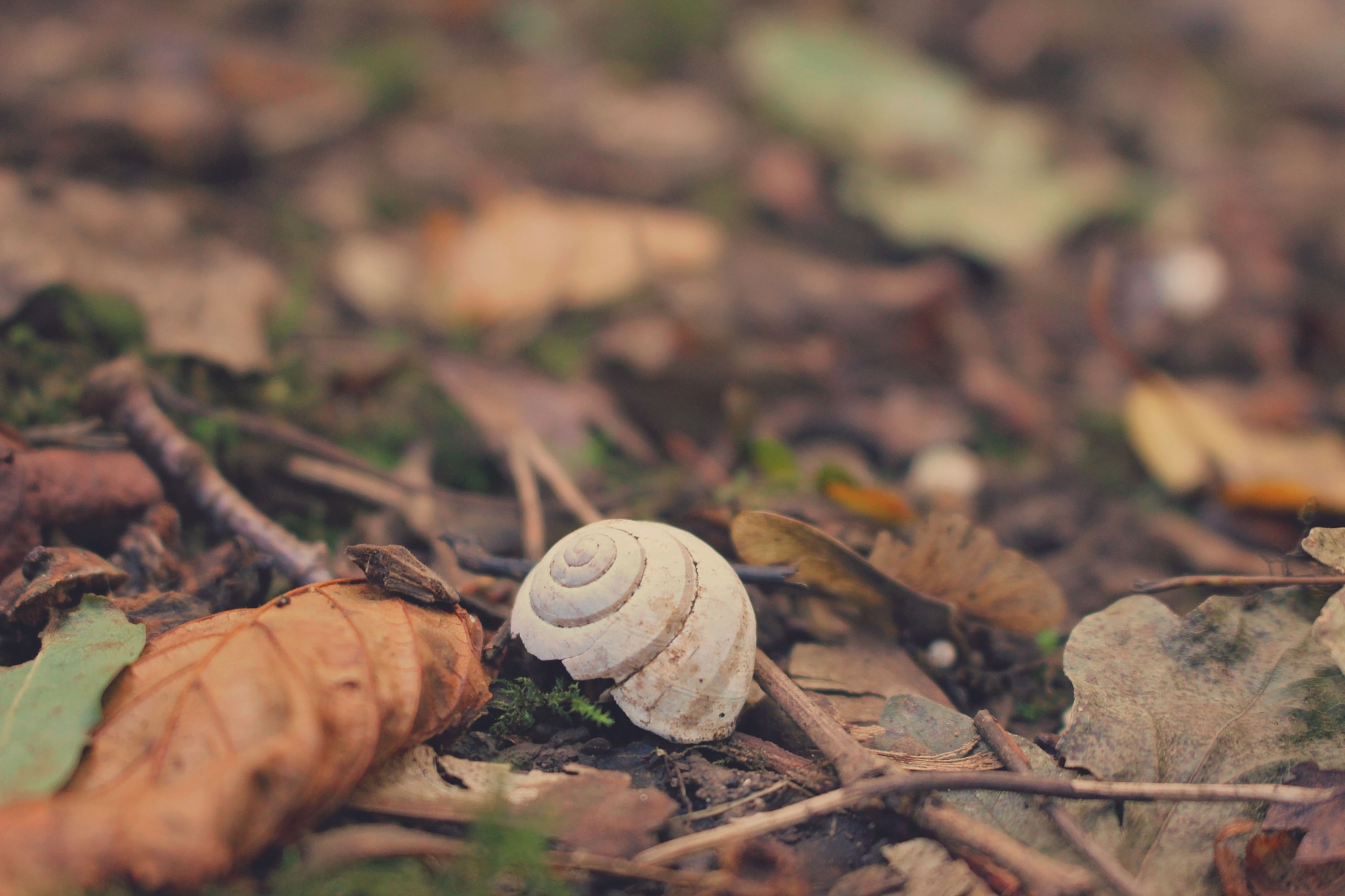 Shell on leaves by Anna Christina Maukner