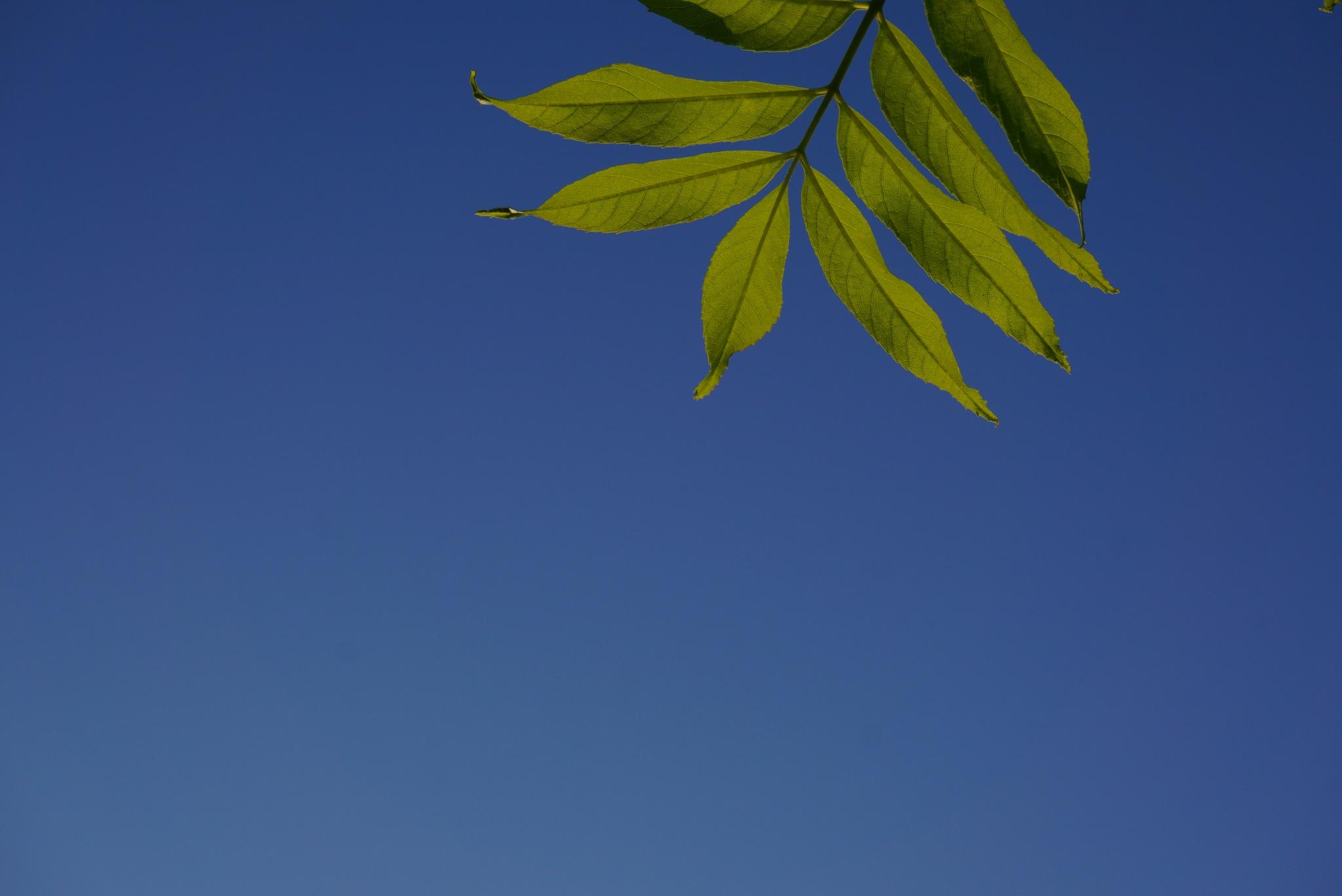 Sky and leaves  by Trevor Babajack Steger