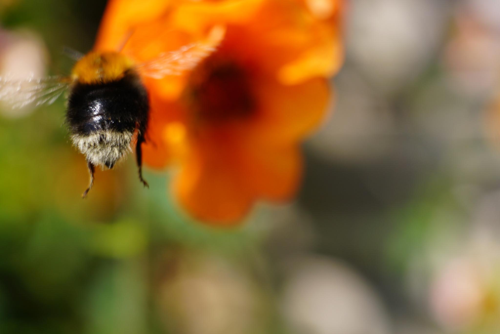 Bee line  by Trevor Babajack Steger