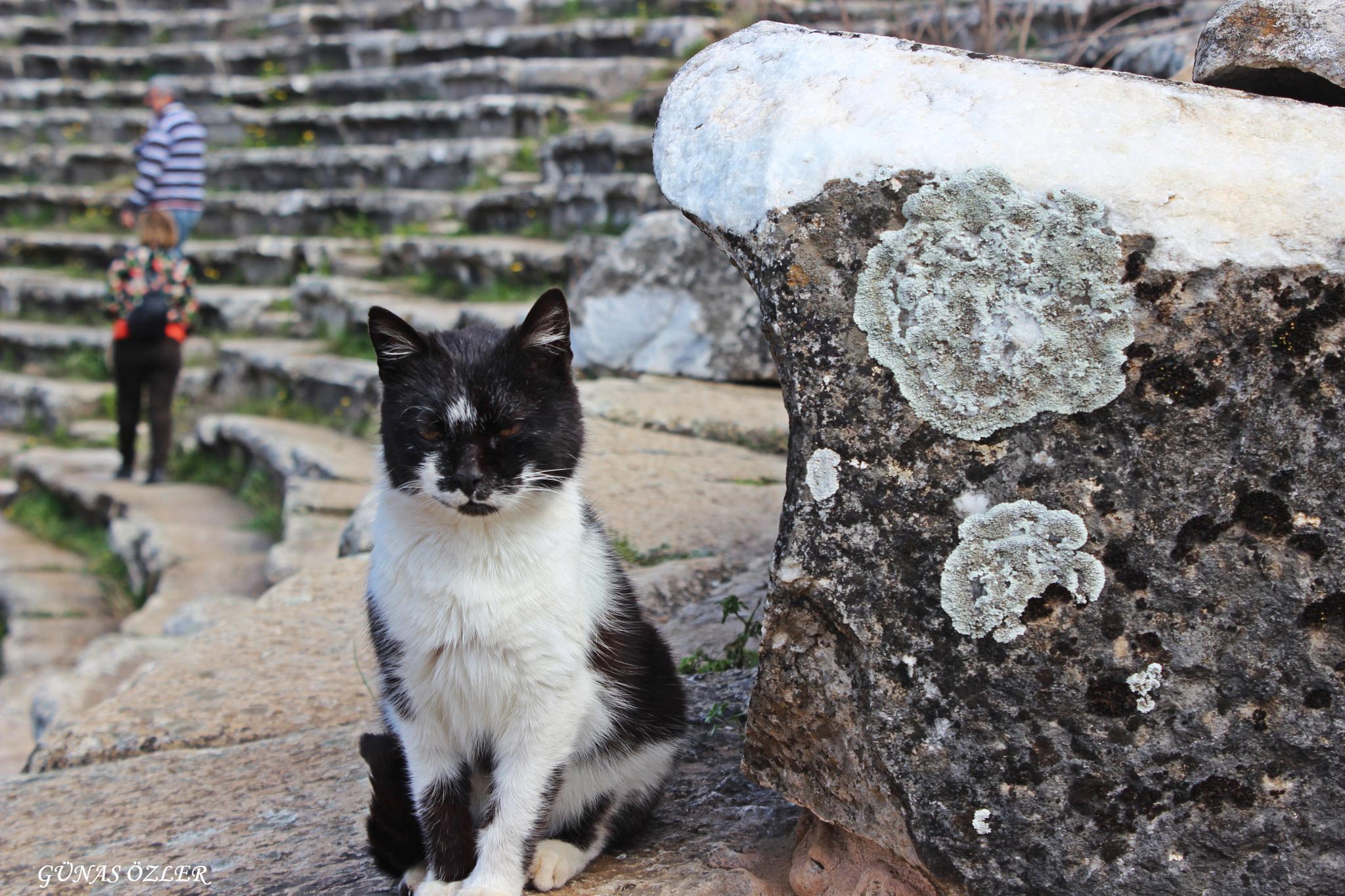 Kedicik by Günas Özler