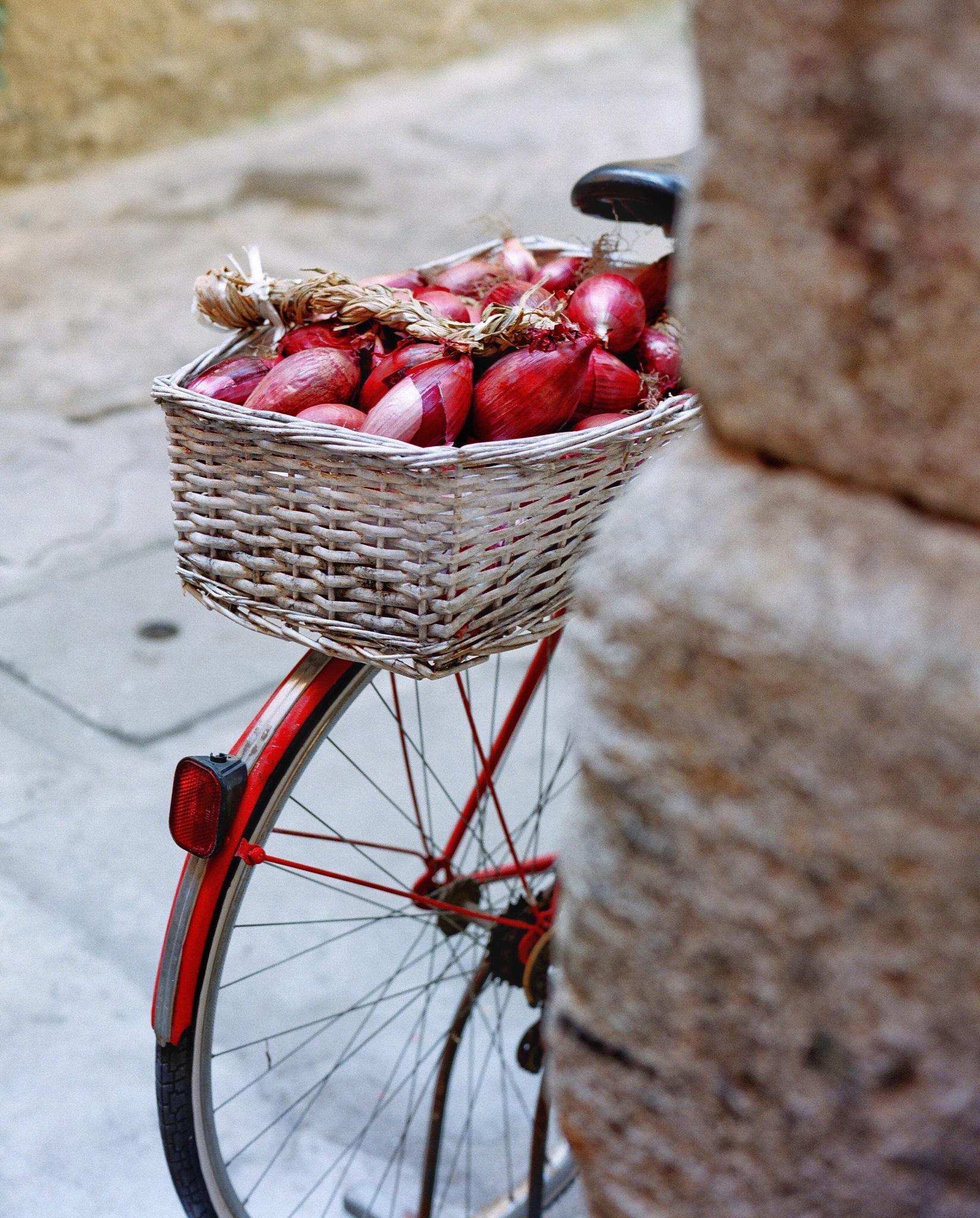 Rossa by wyemji