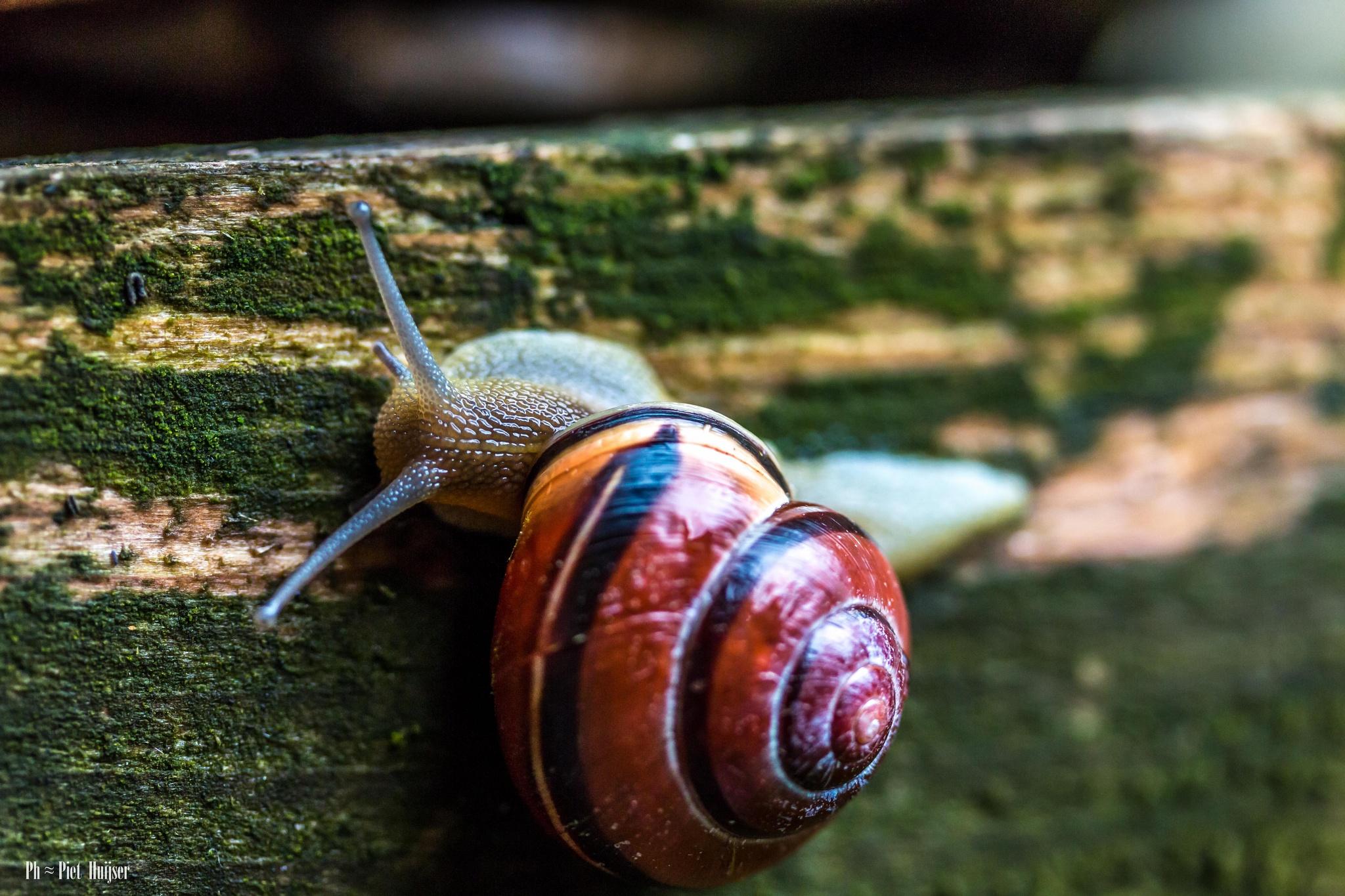 beautiful, but not snails in the garden by Piet Huijser