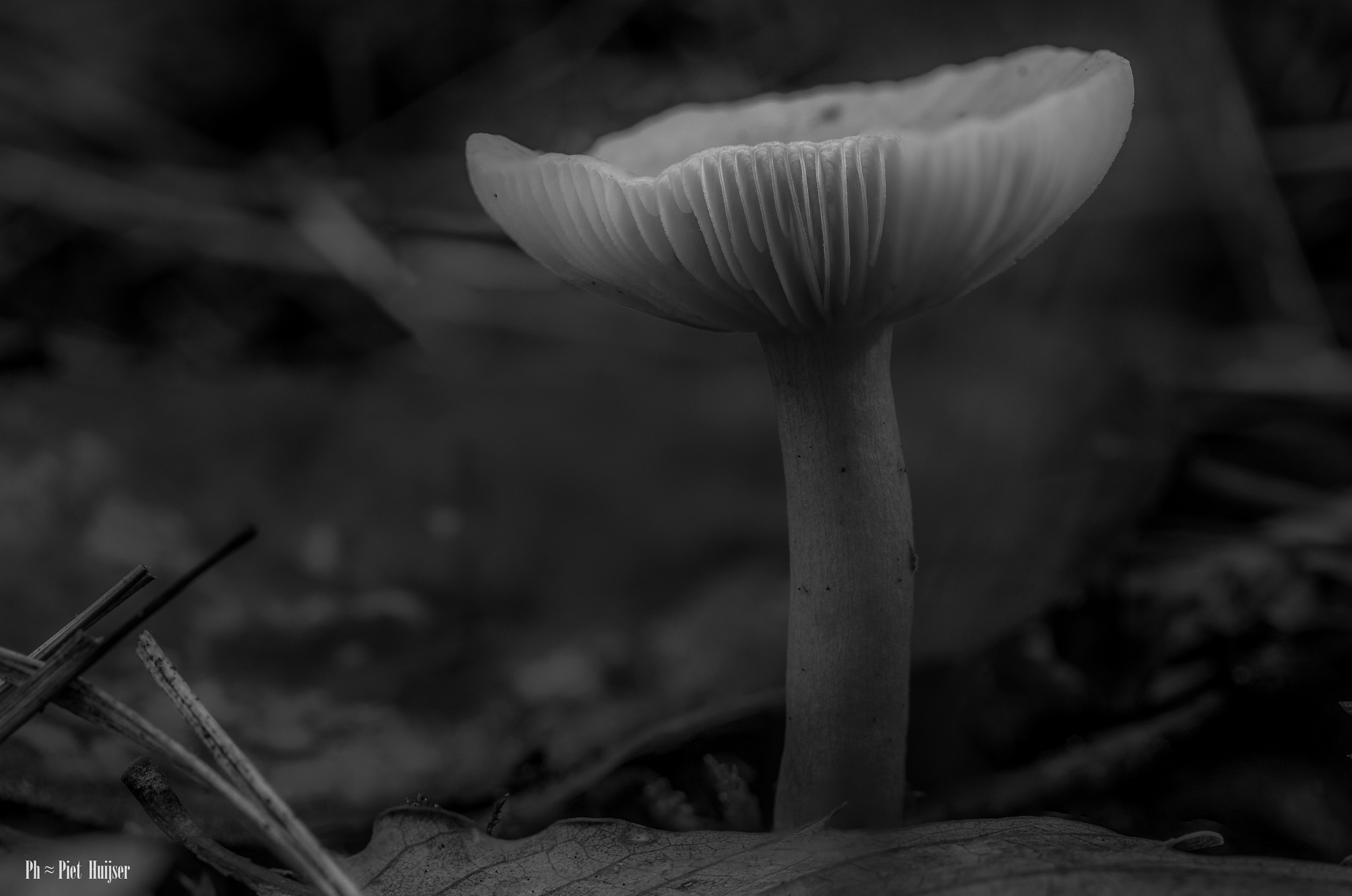 Today beautiful weather for a forest walk, looking for mushrooms by Piet Huijser
