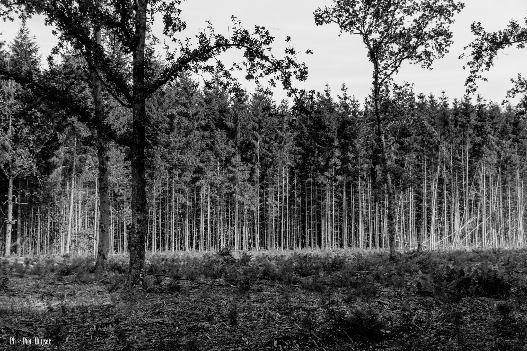 De oldemeijer Hardenberg by Piet Huijser