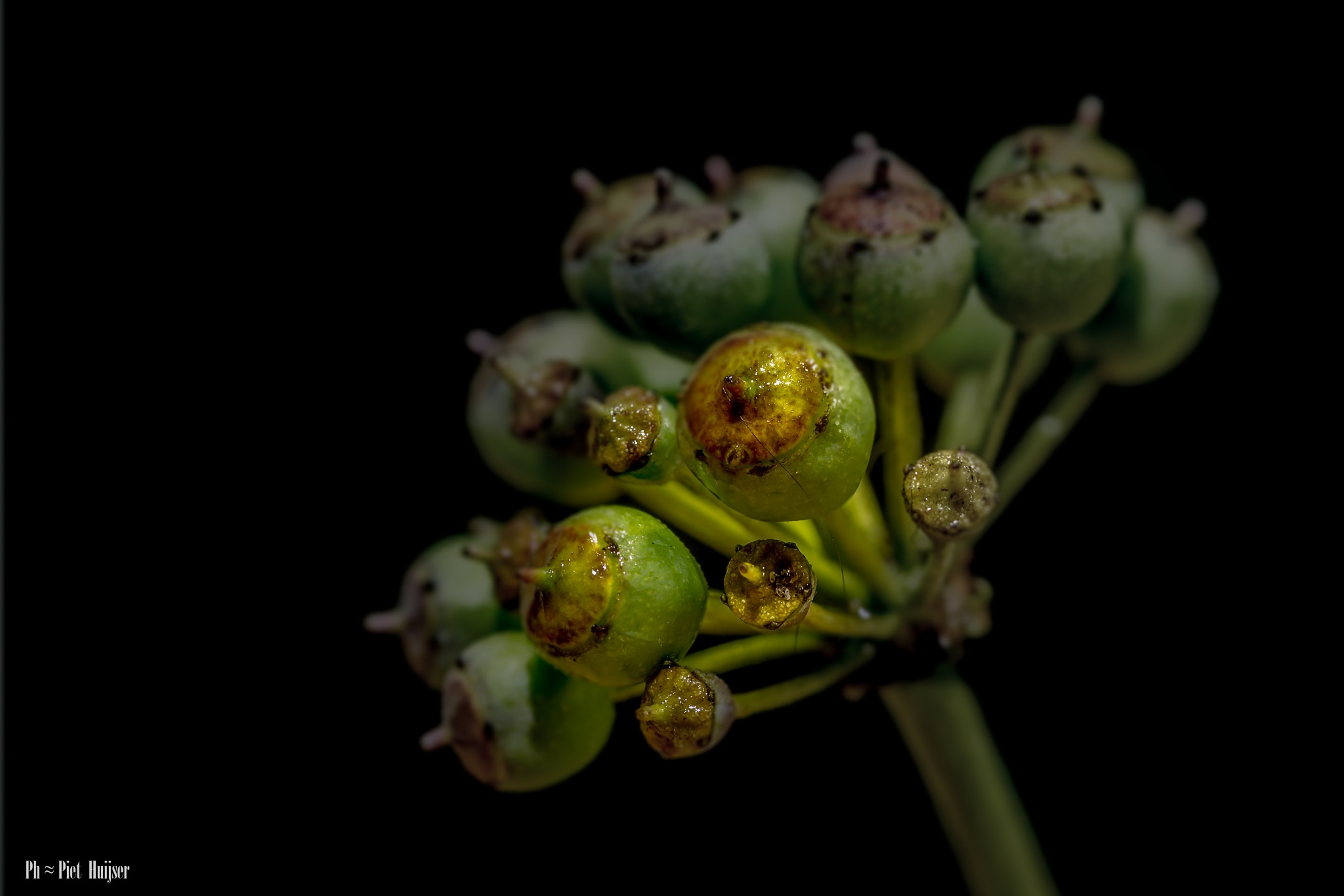 More seeds more than flowers in the garden by Piet Huijser