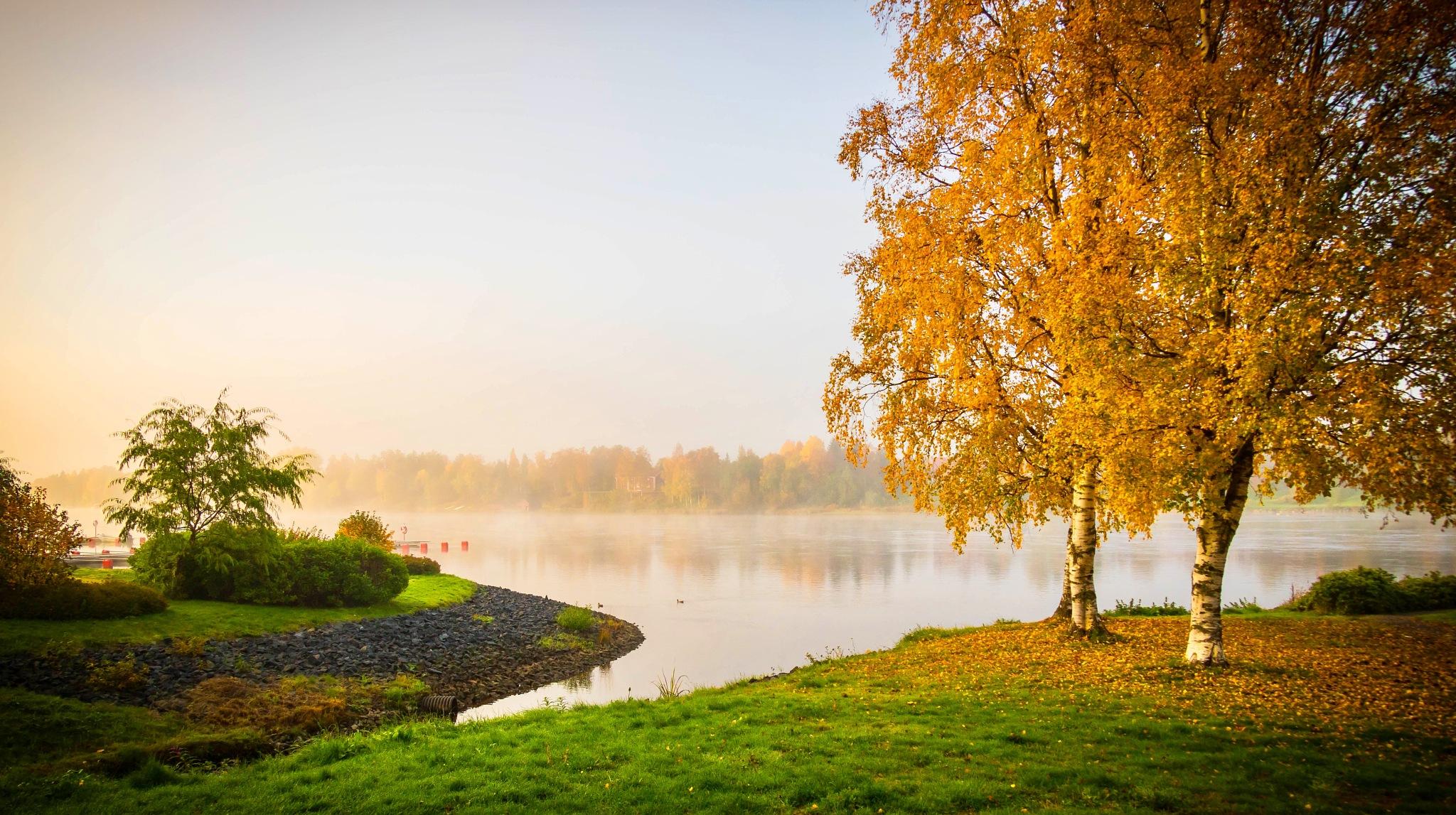 Fall morning  by Sheku Conteh