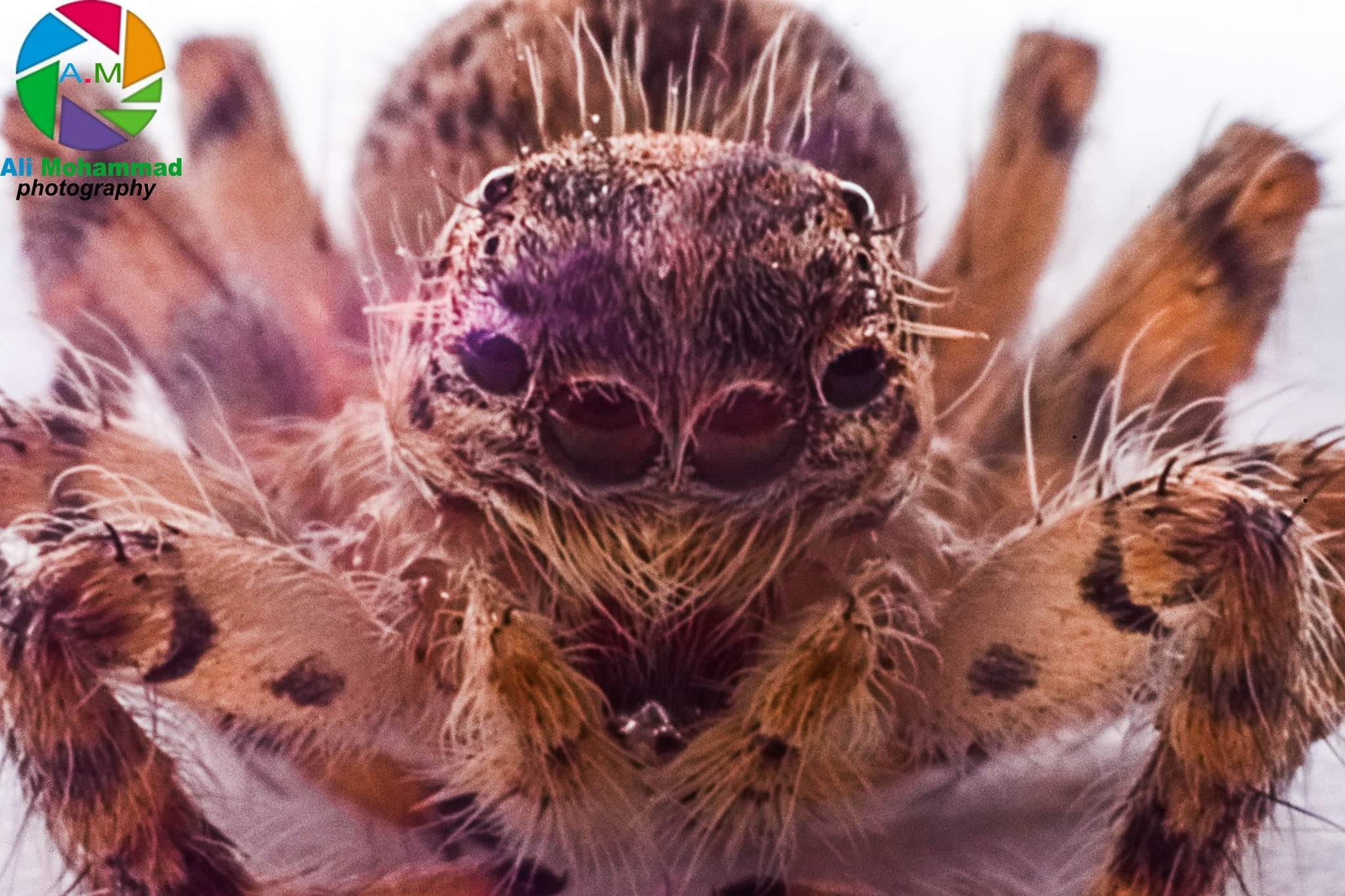 Macro Spider  by Ali Mohammad