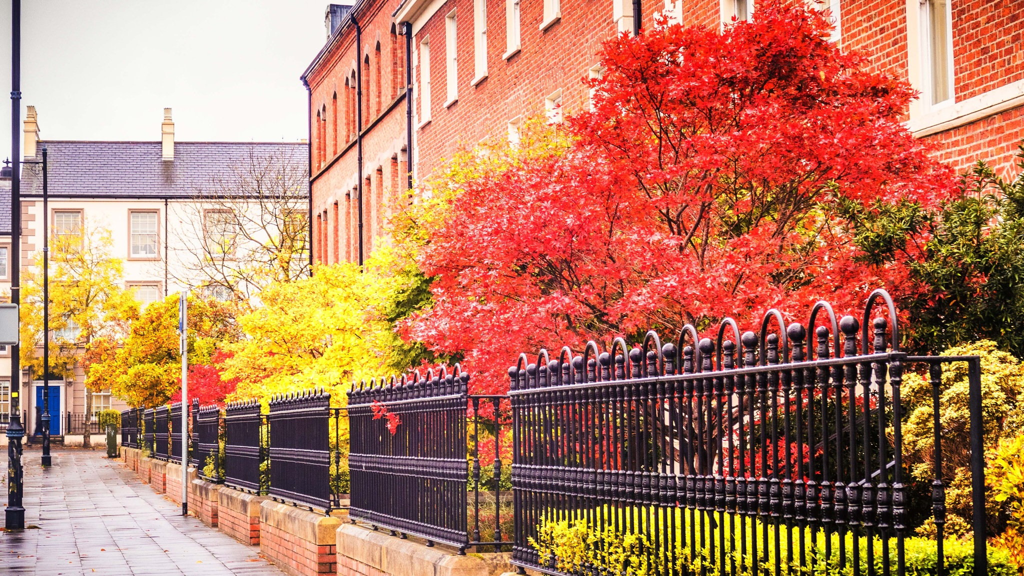 Fall at Queen's. no.2 by billymcwilliams