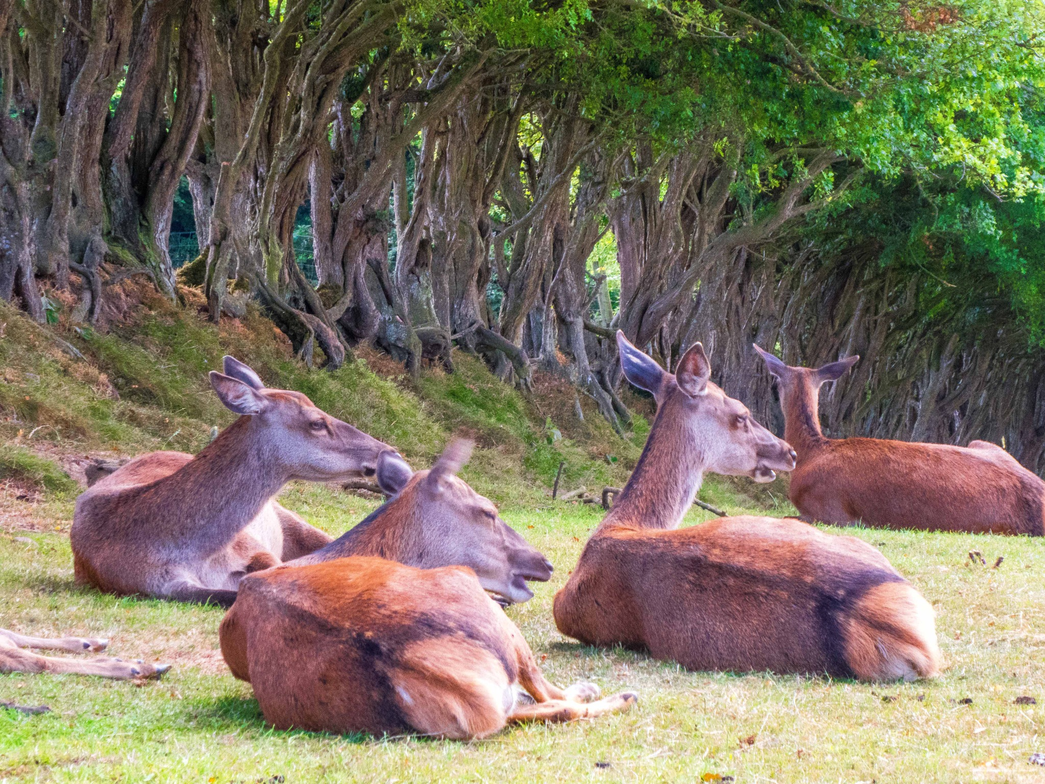 Red Deer in the Shade by billymcwilliams