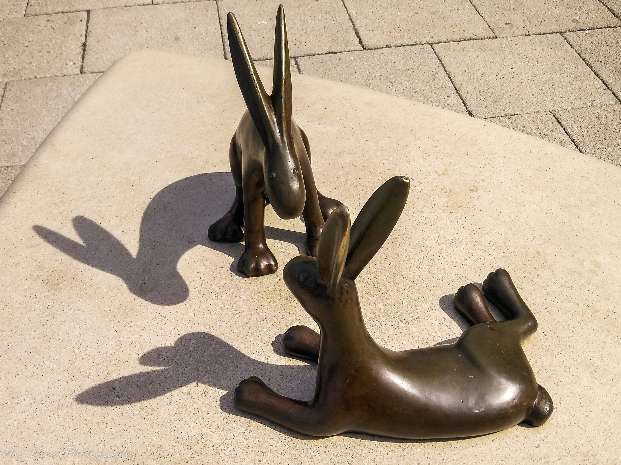 Rabbit shadows by Nic Drew