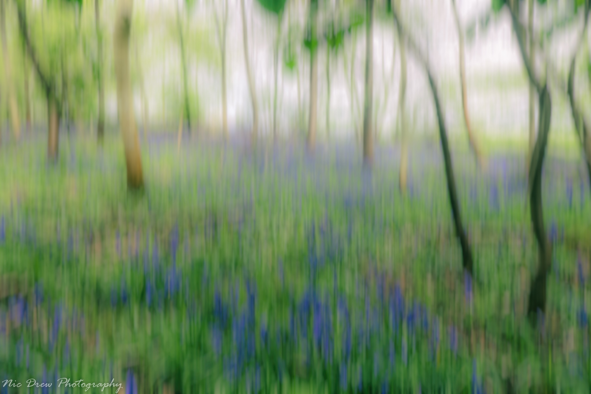 Bluebell woods by Nic Drew
