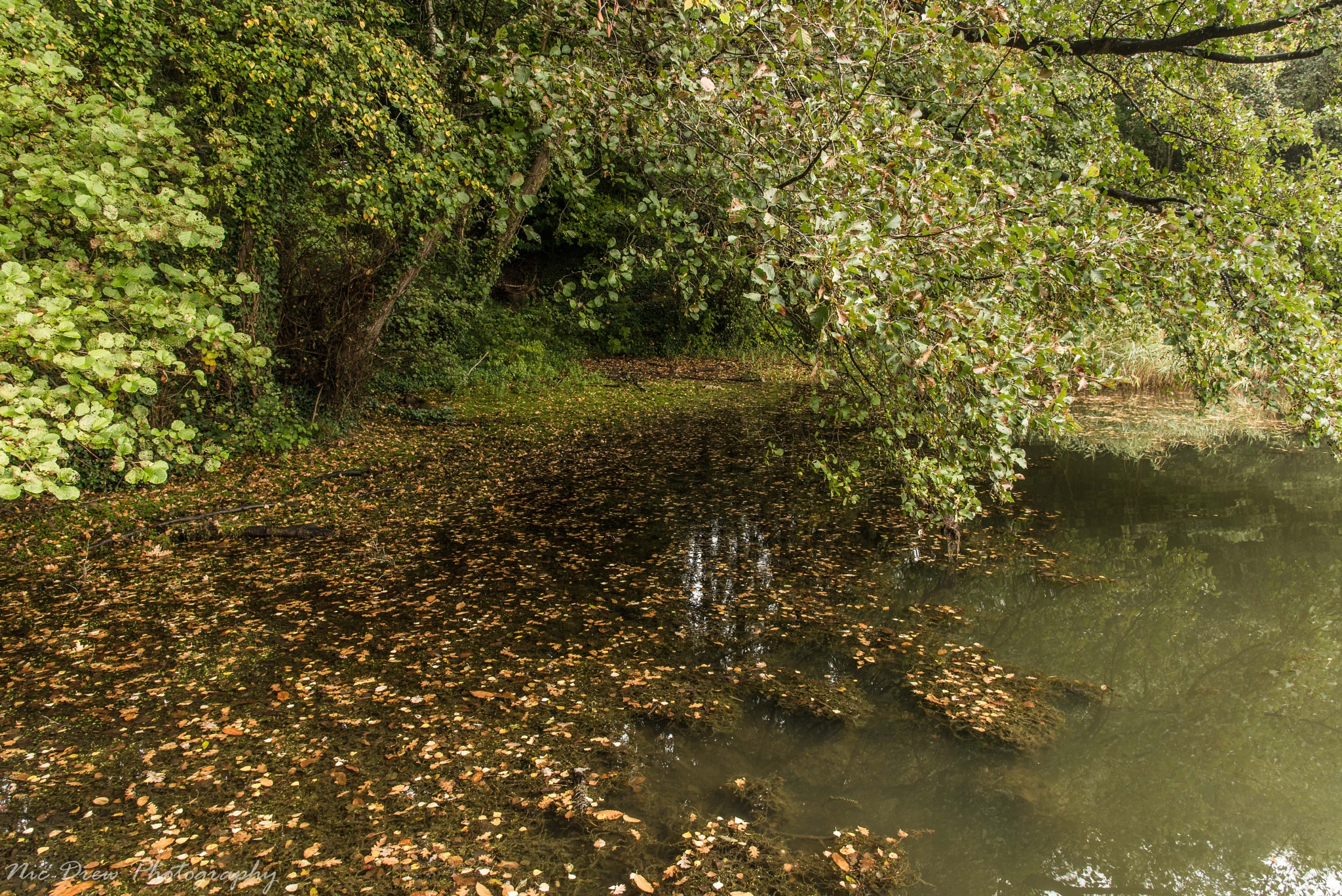 Leaves in a pond by Nic Drew