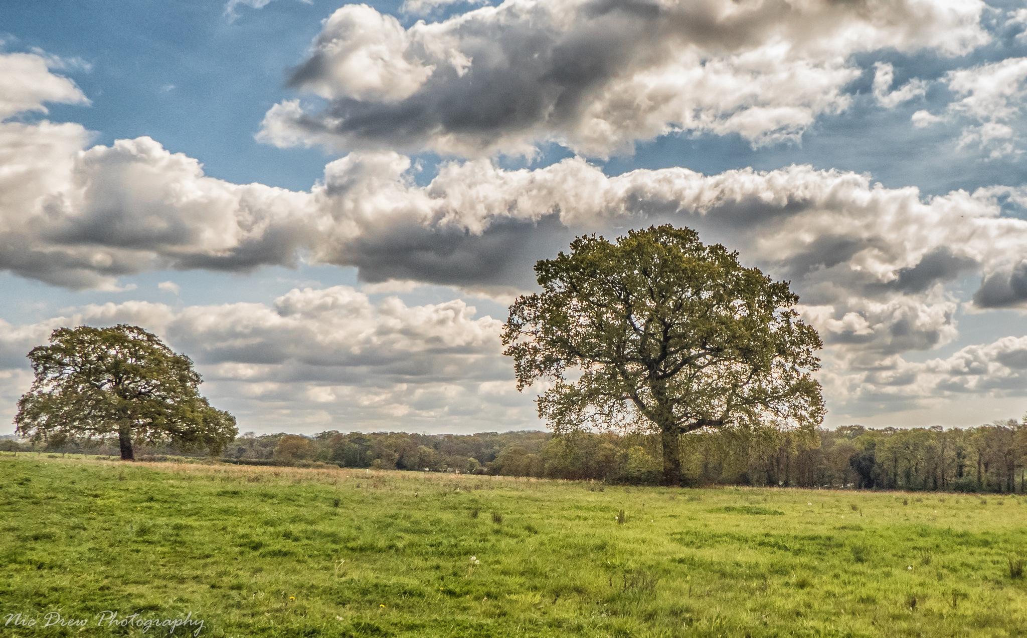 2 trees by Nic Drew