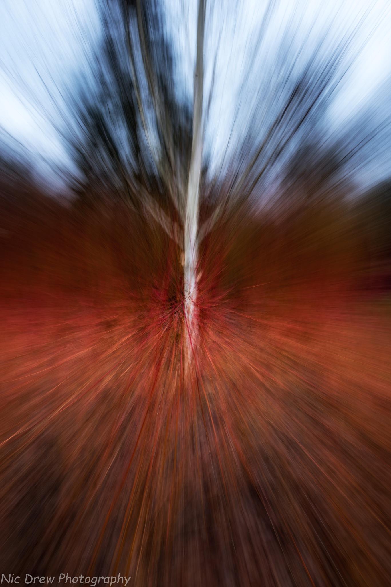 Zoom lens  (1) by Nic Drew