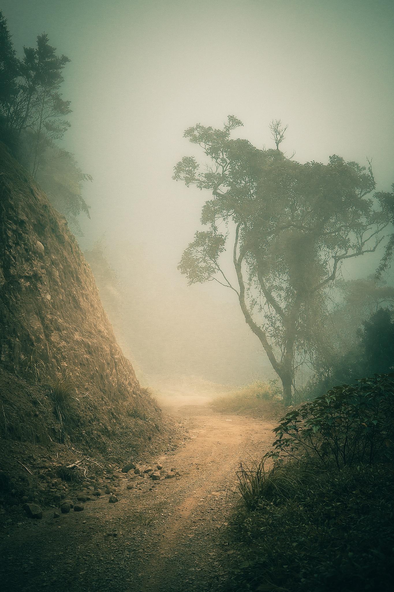 foggy trail by francis