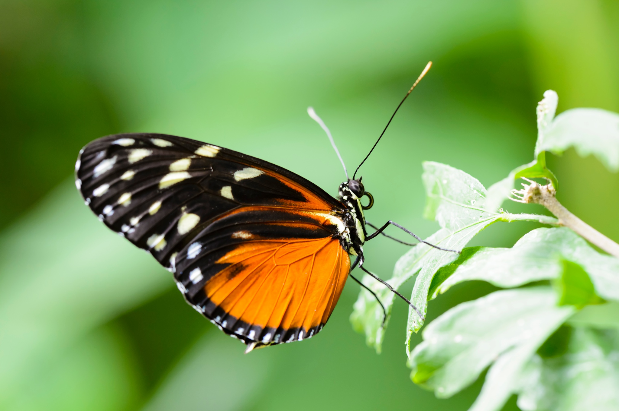 Monarch Butterfly at Rest by slightlydazed