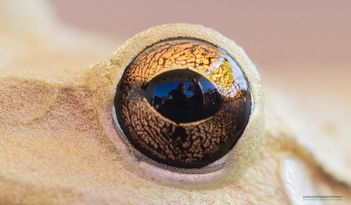 Reflections in the eye of a frog by Casper Douma