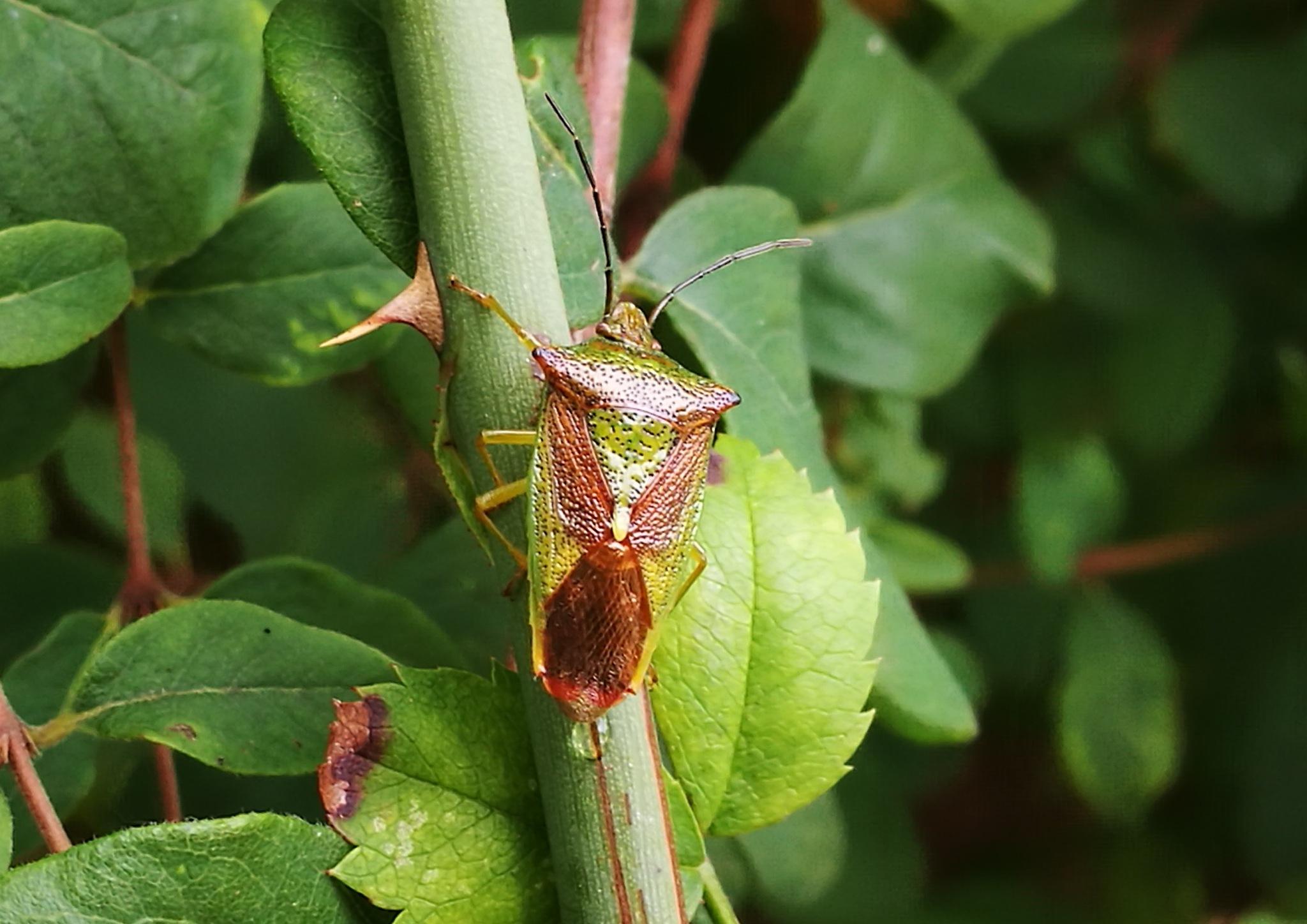 Bug by Steven Iodice