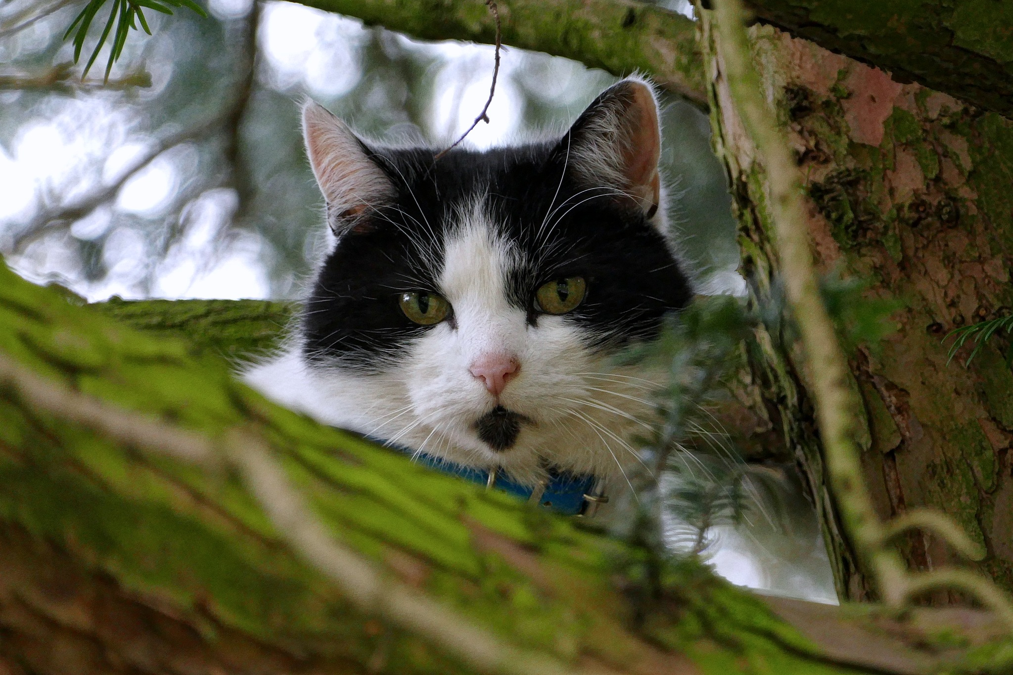 Cat Up A Tree by Steven Iodice