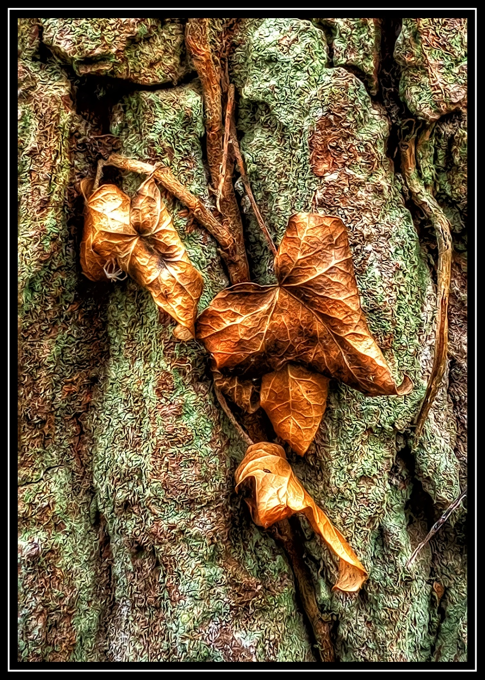 Old Leaves by Steven Iodice