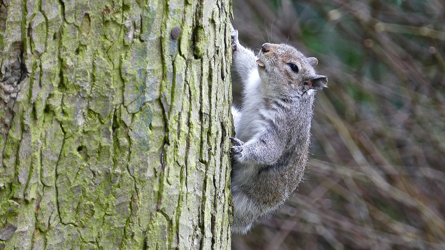 Squirrel Up A Tree by Steven Iodice