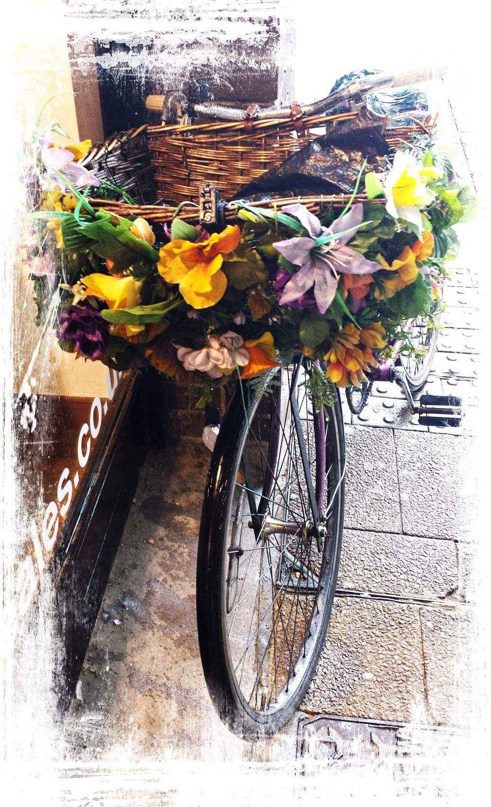 Flower Bicycle  by Steven Iodice