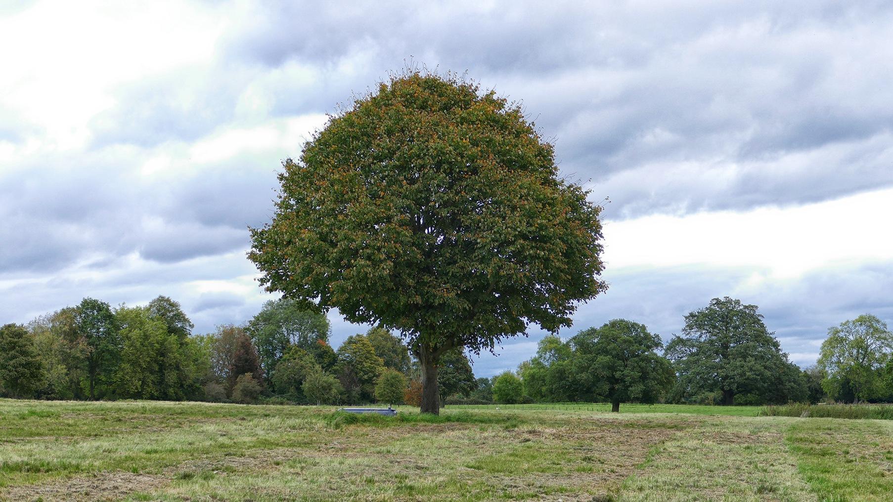 Bromham tree by Steven Iodice