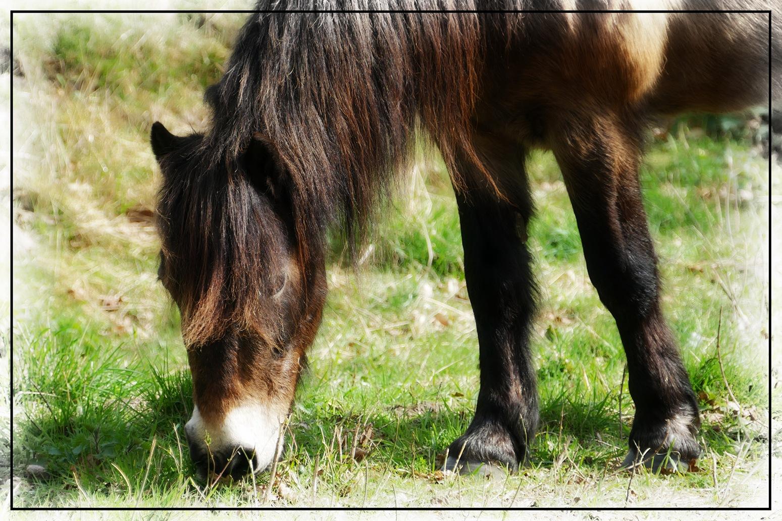 Wild Pony by Steven Iodice