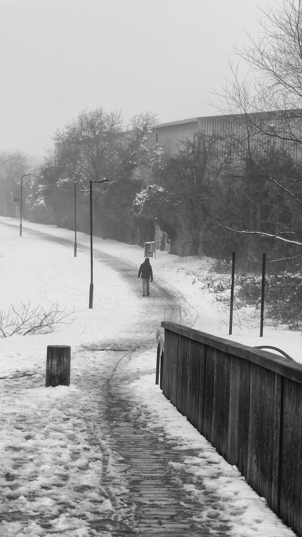 Long Walk Home by Steven Iodice