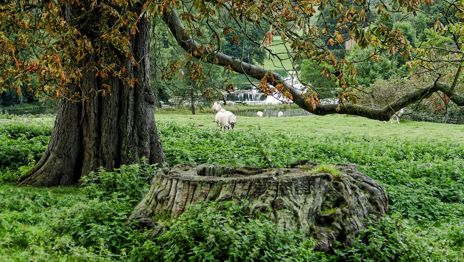 Grazing Sheep by Steven Iodice