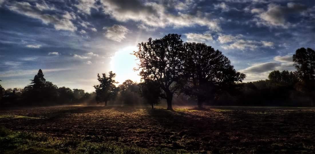 B Morning  by Steven Iodice