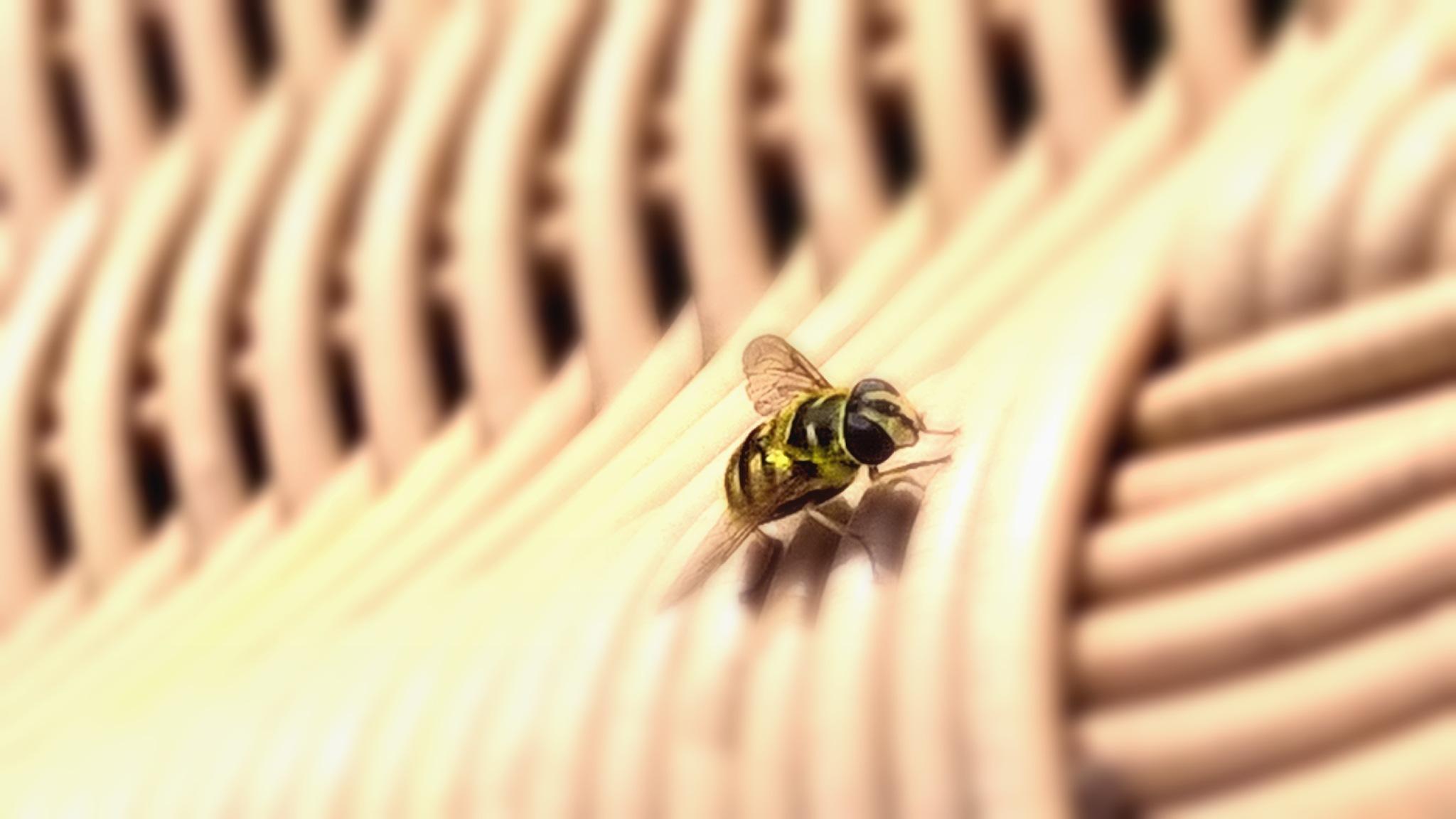 fly by David Skinner