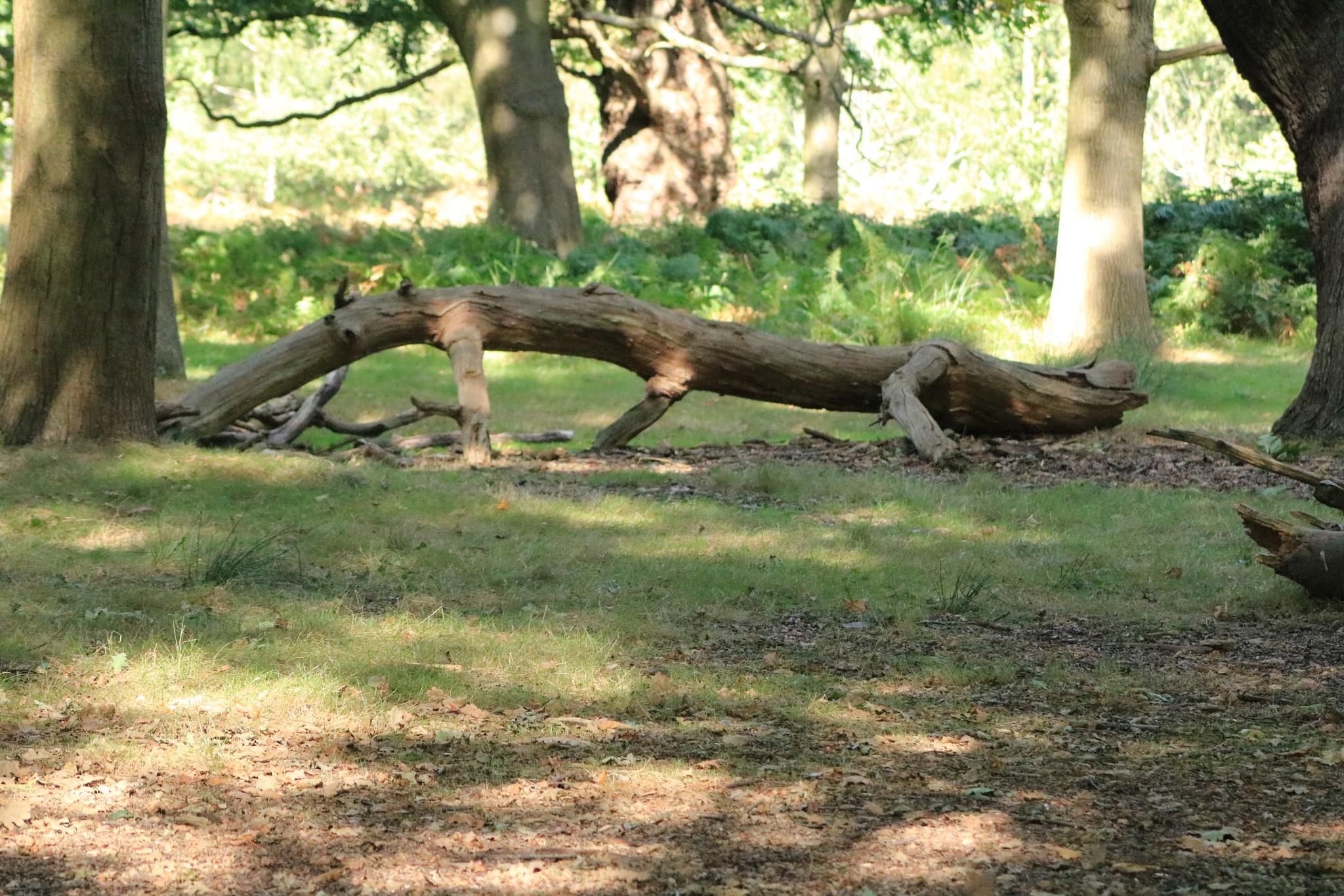 A lizard or croc lookalike tree branch! by Mo Dessouki