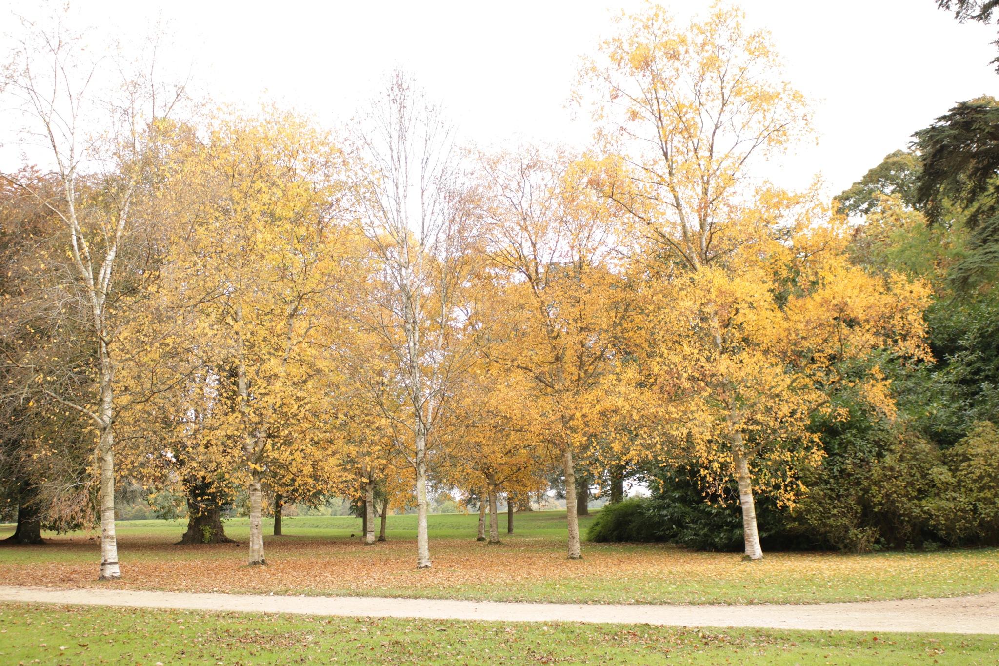 Autumn at Blenhiem Palace by Mo Dessouki