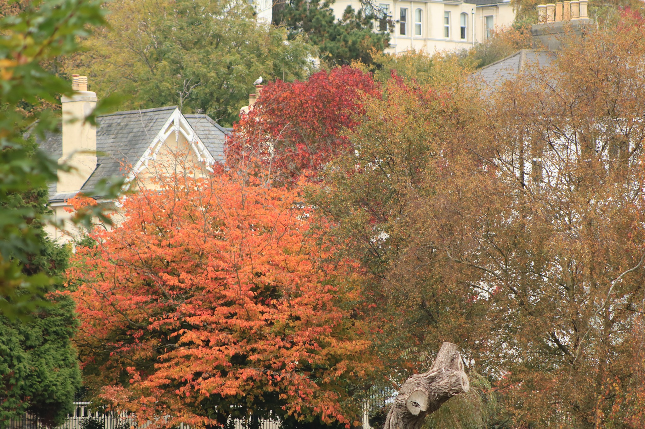 Nice autumn trees in Alexandra Park, Hastings by Mo Dessouki