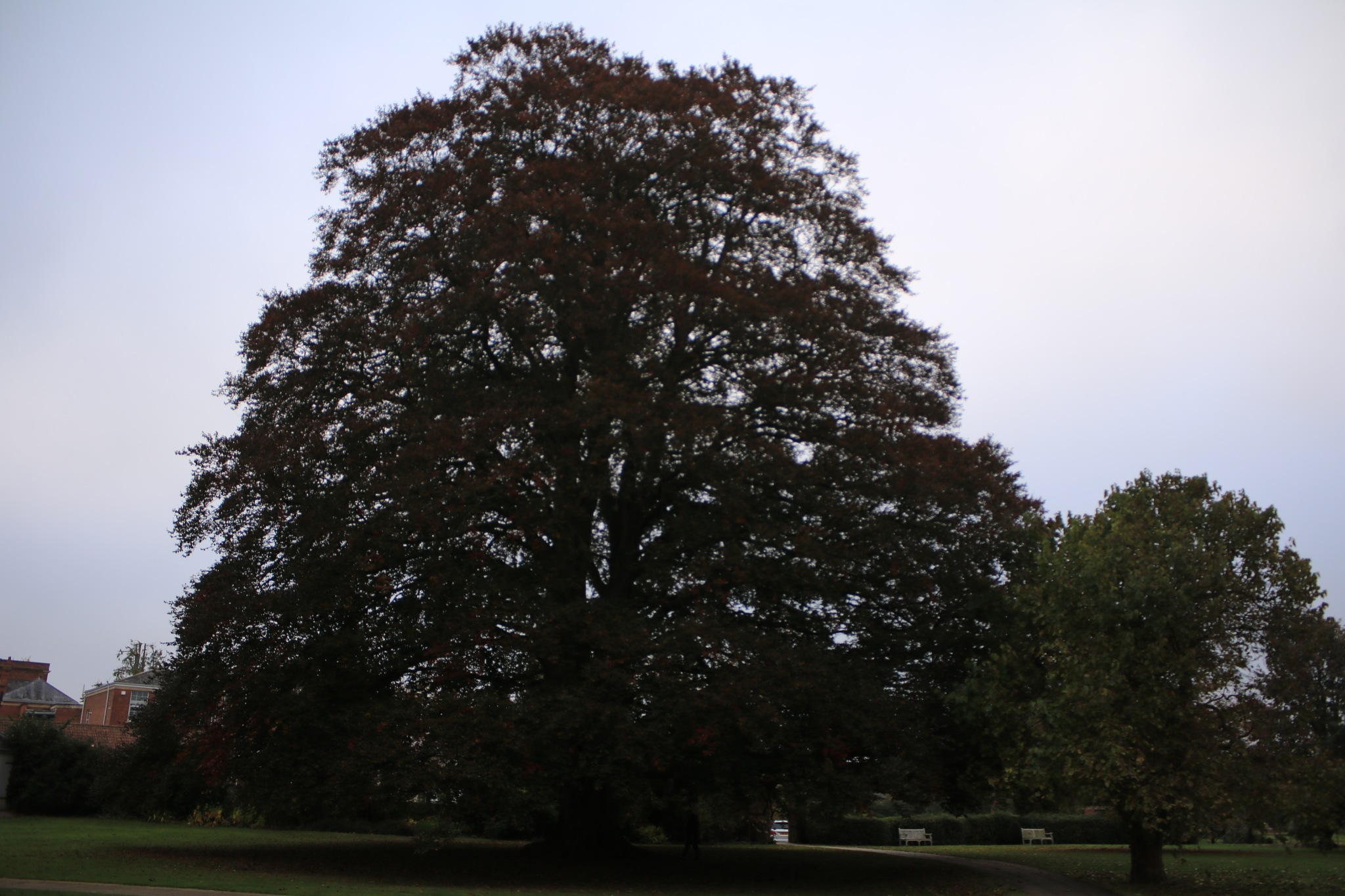 a massive tree in the abbey grounds by Mo Dessouki