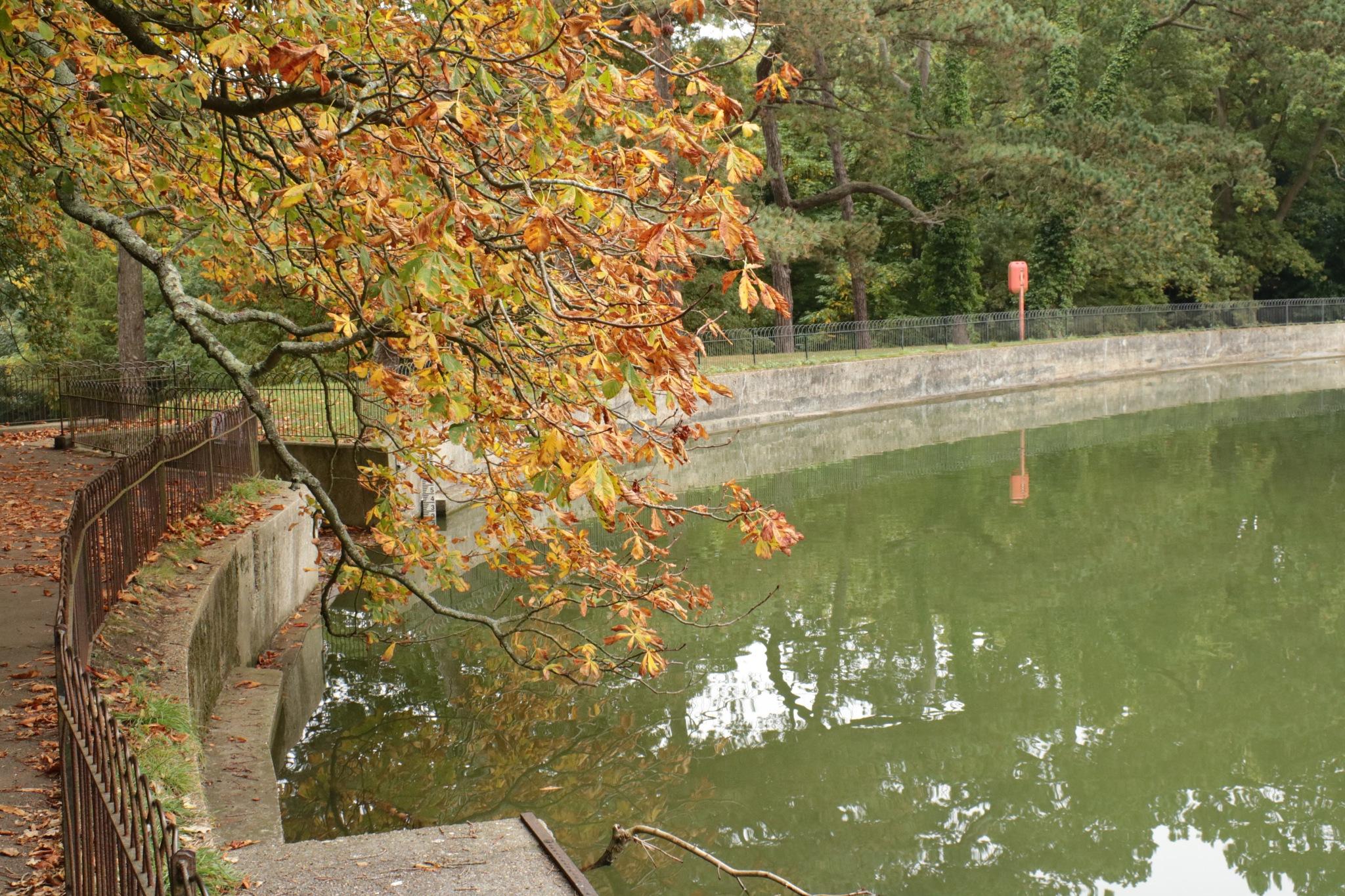 Autumn golden leaves, Alexandra Park by Mo Dessouki