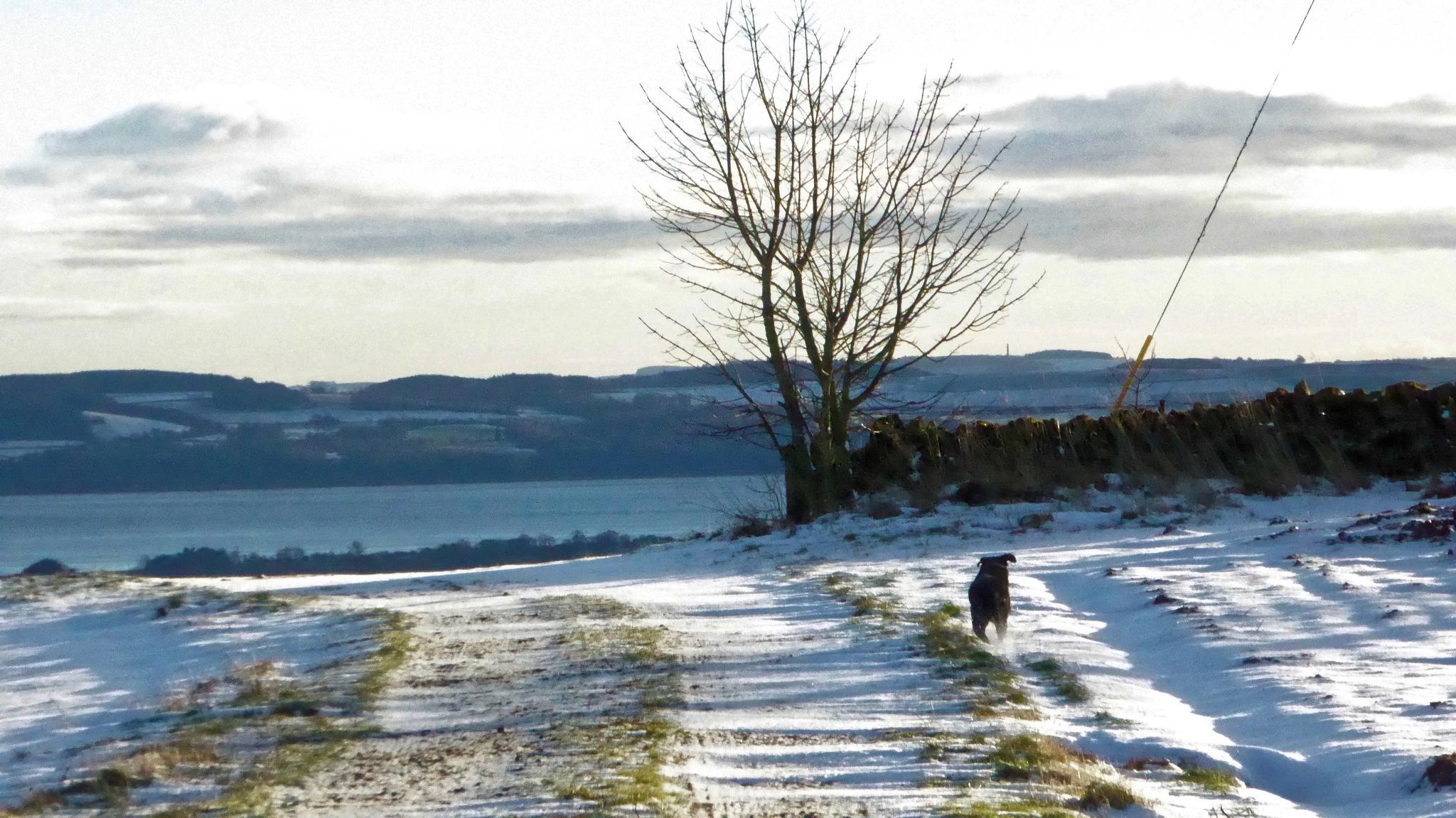 Branna's winter romp by Nick Birch