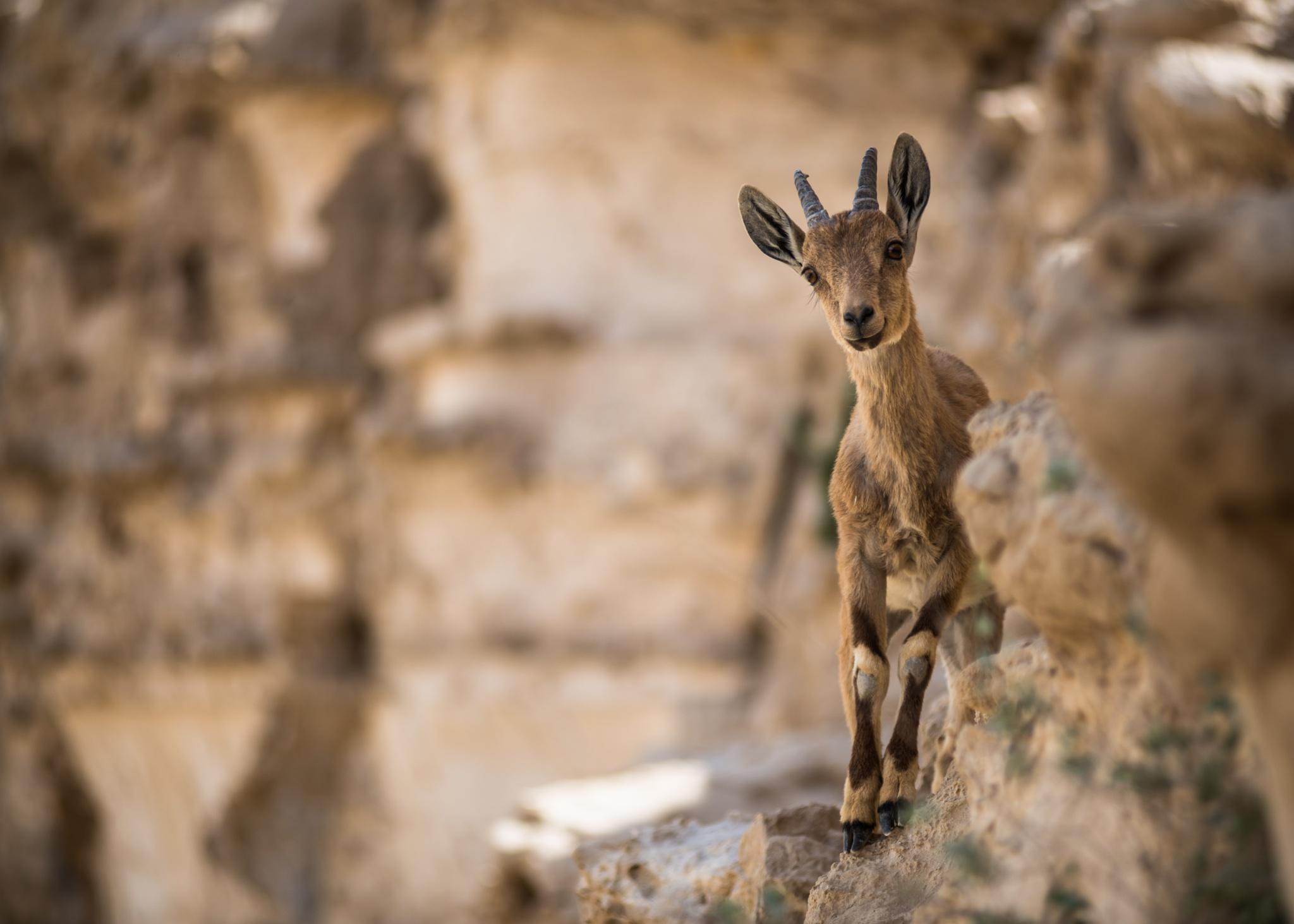 Desert life by Tomasz Solinski