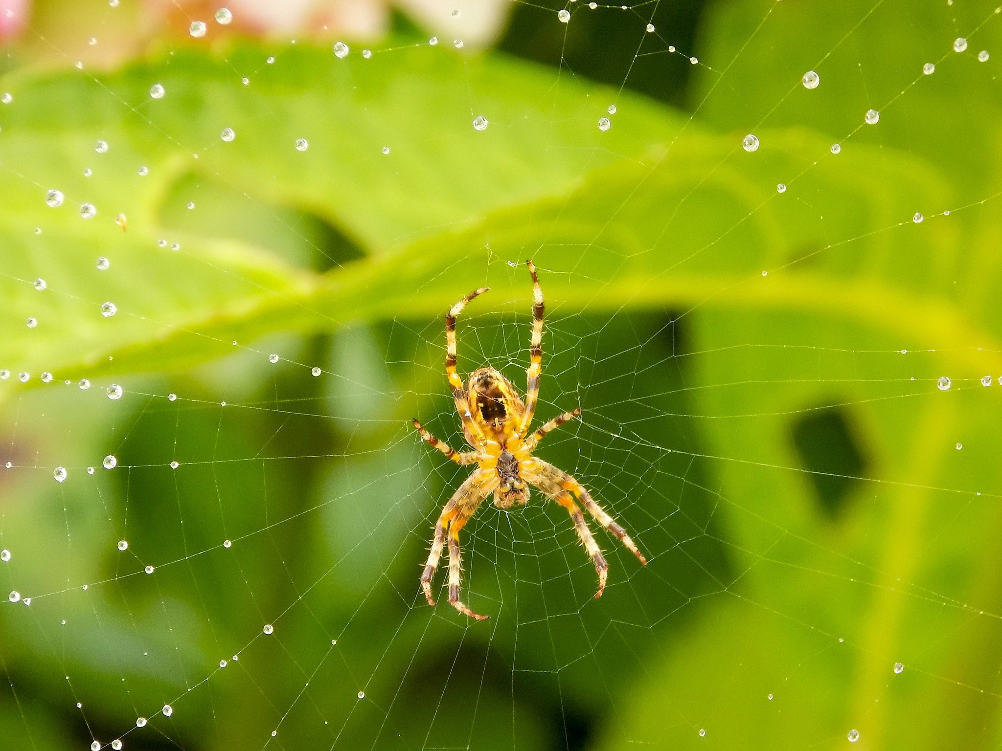 Itsy Bitsy Spider by Steve Rowe