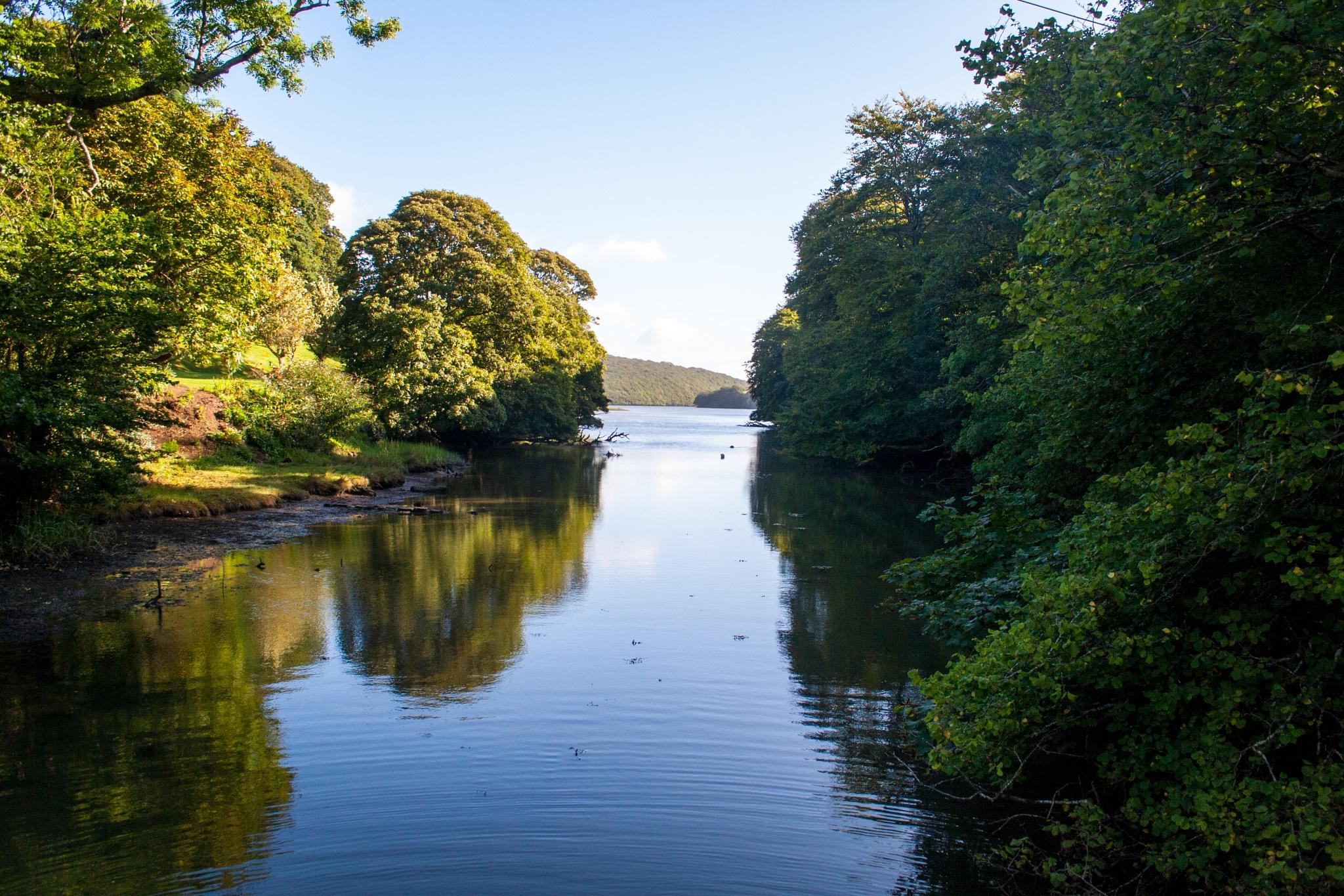 Creekside Reflections by Steve Rowe