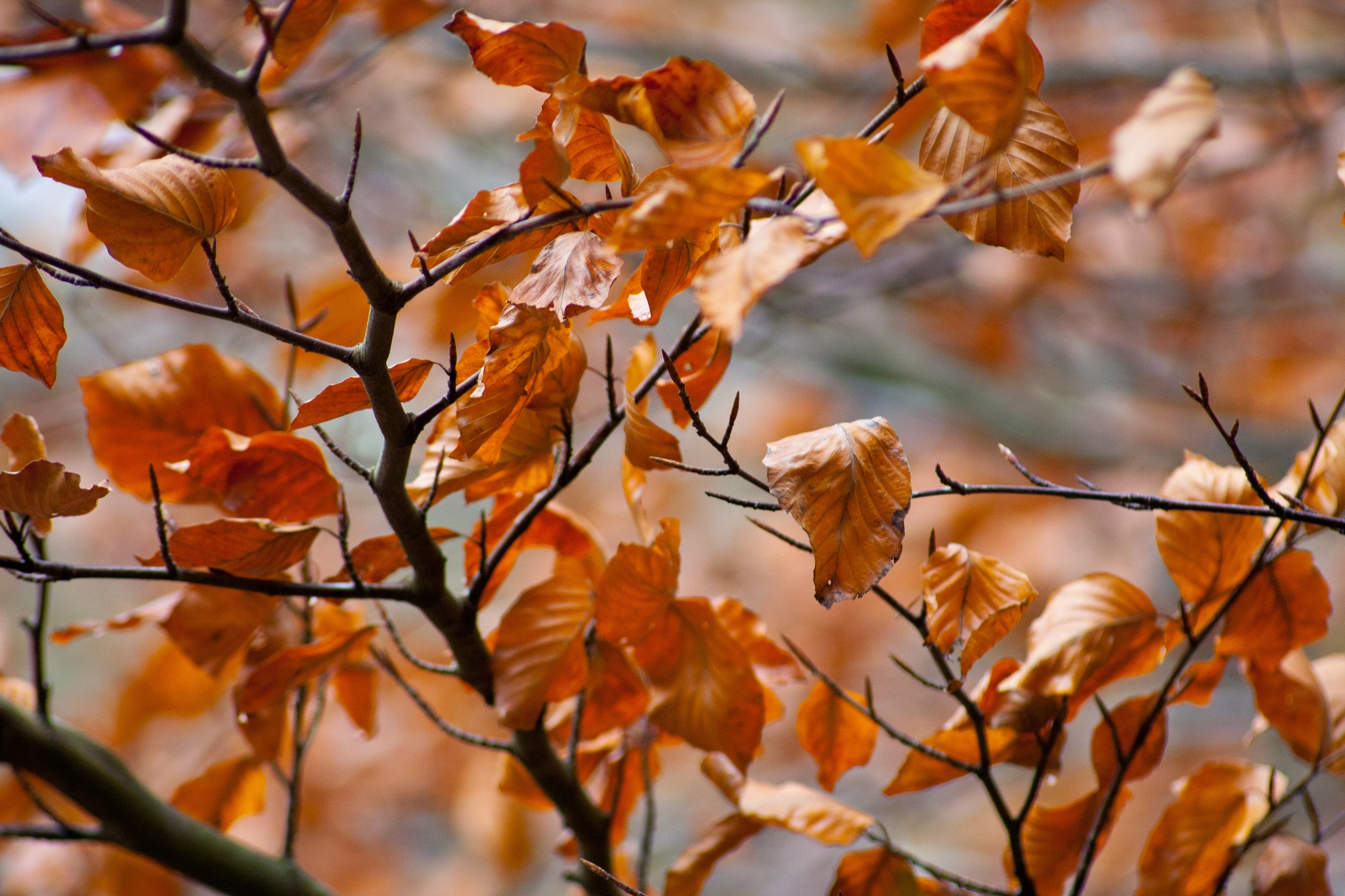 The Copper Tree by Steve Rowe