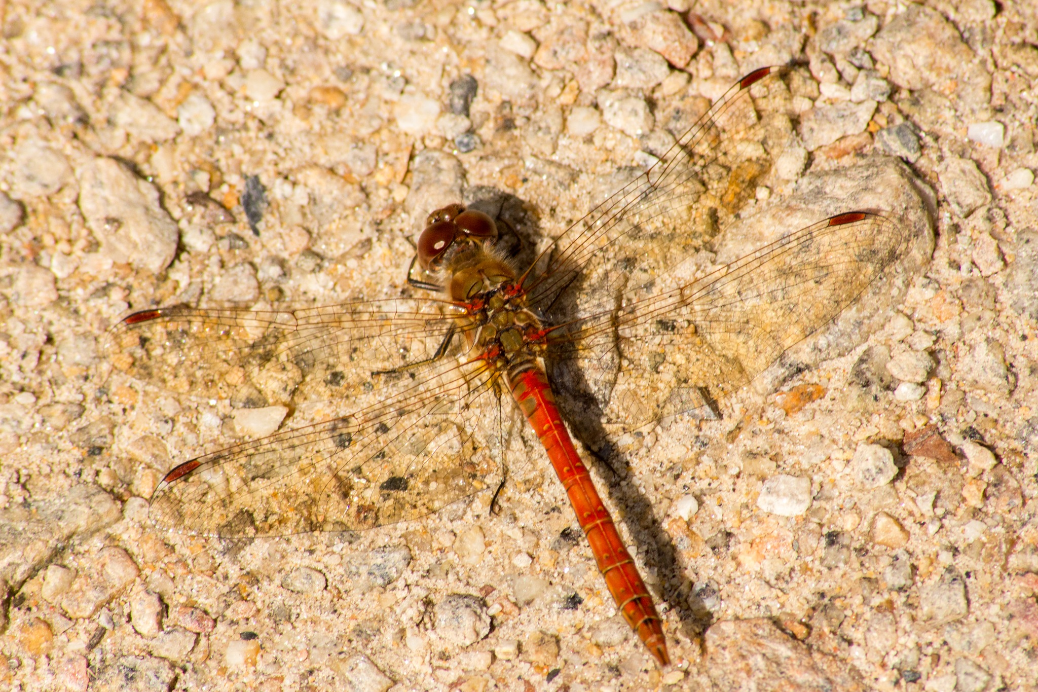Dragonfly 2 by Steve Rowe
