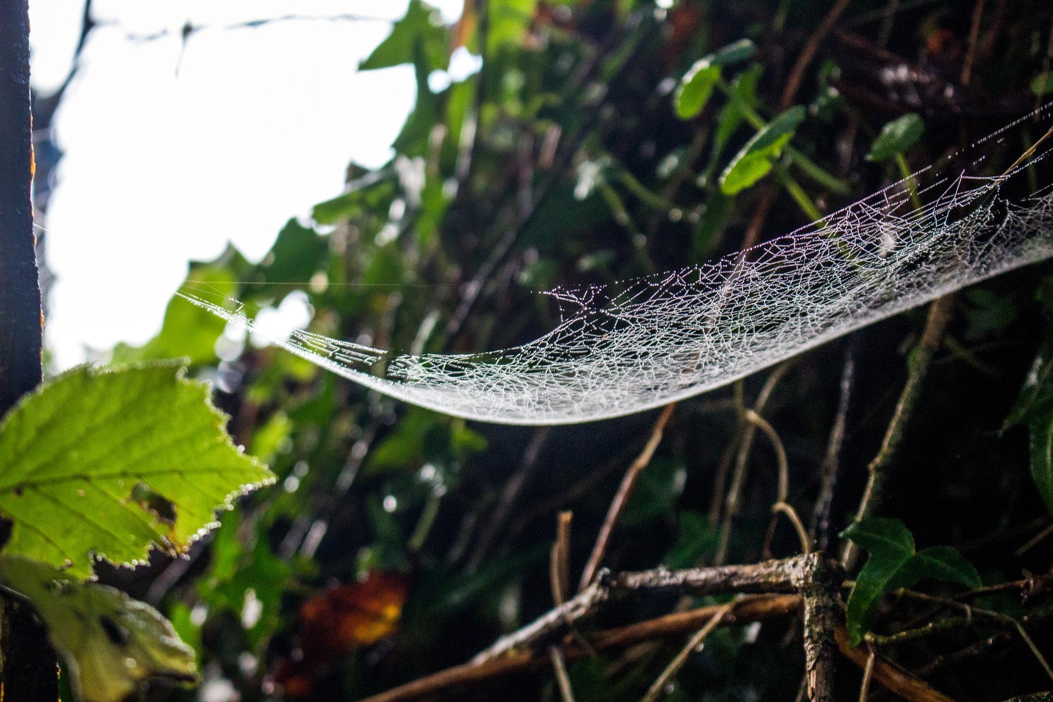 Intricate Web by Steve Rowe