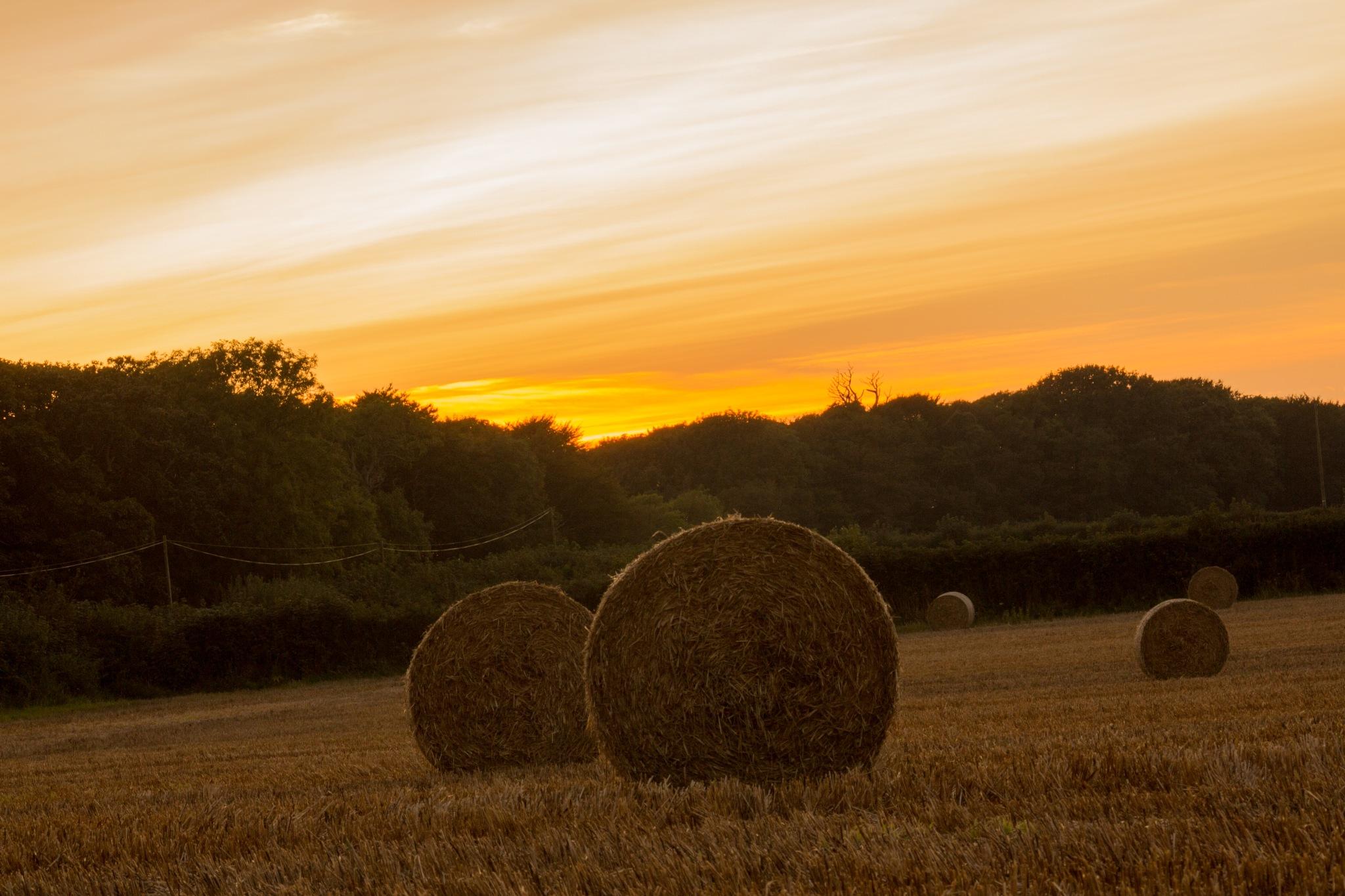Rural Scene 1 by Steve Rowe